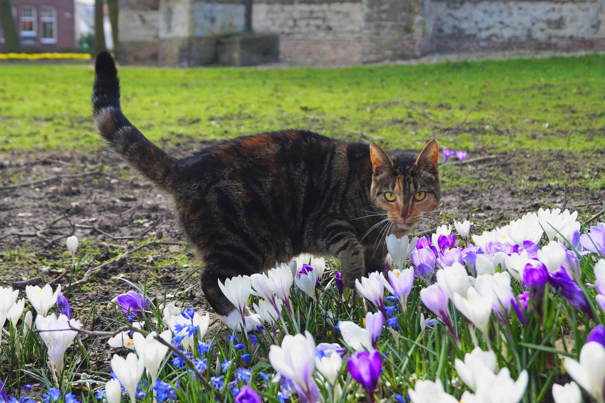 Curious Cat by Marian Baay