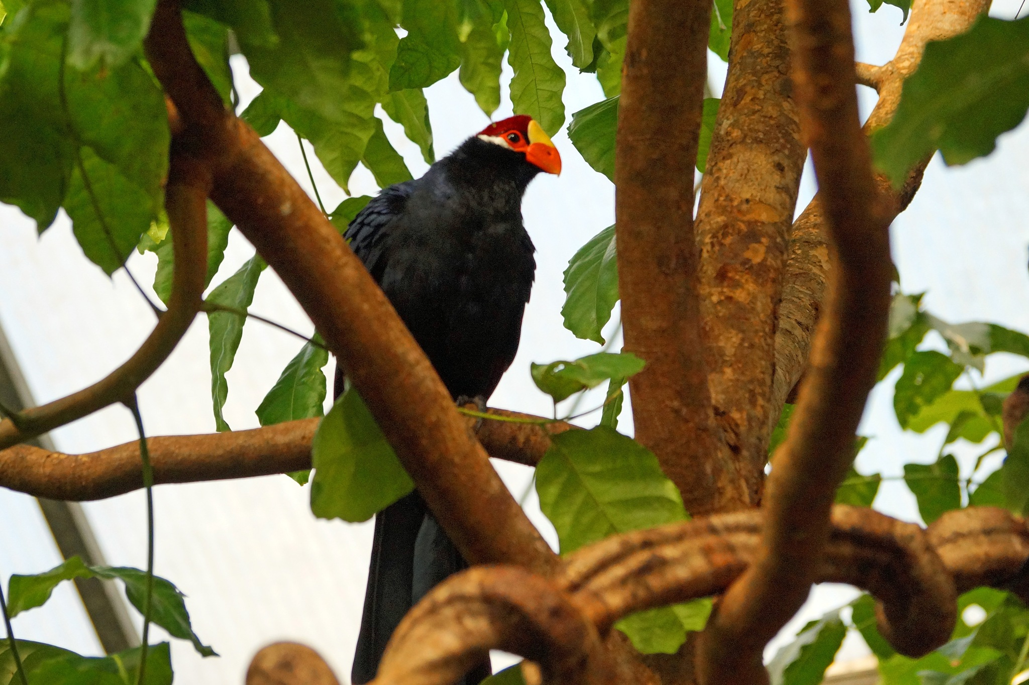 Bird at the Zoo by Marian Baay