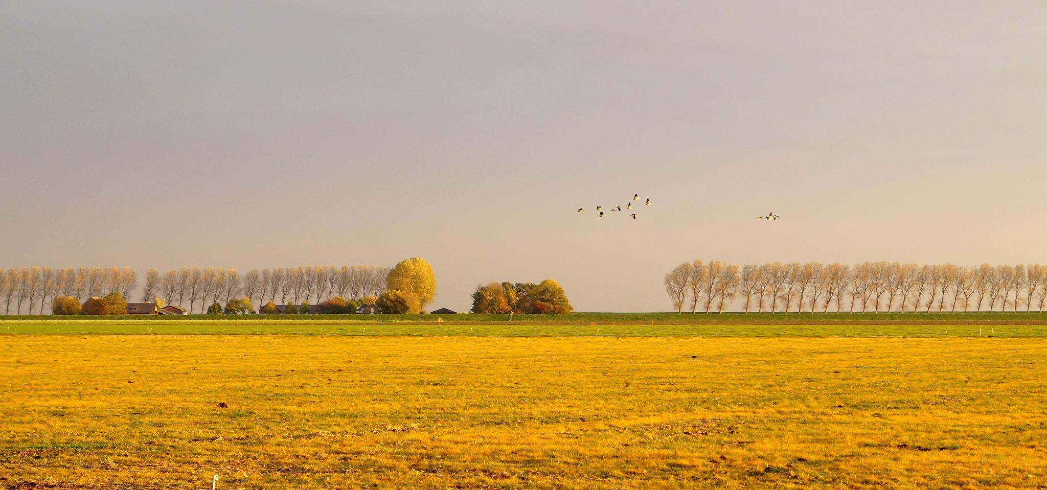 Golden Hour - Golden Landscape by Marian Baay