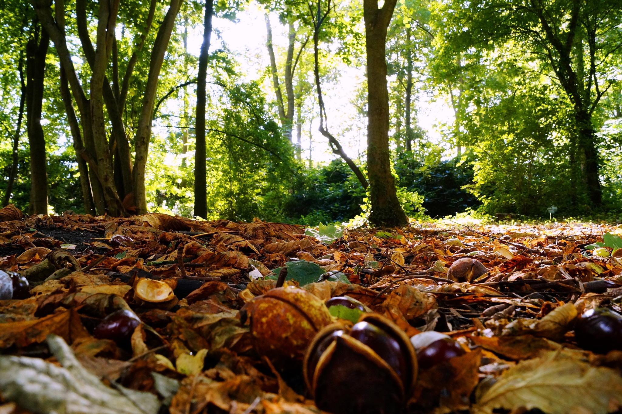 Beginning of Autumn by Marian Baay