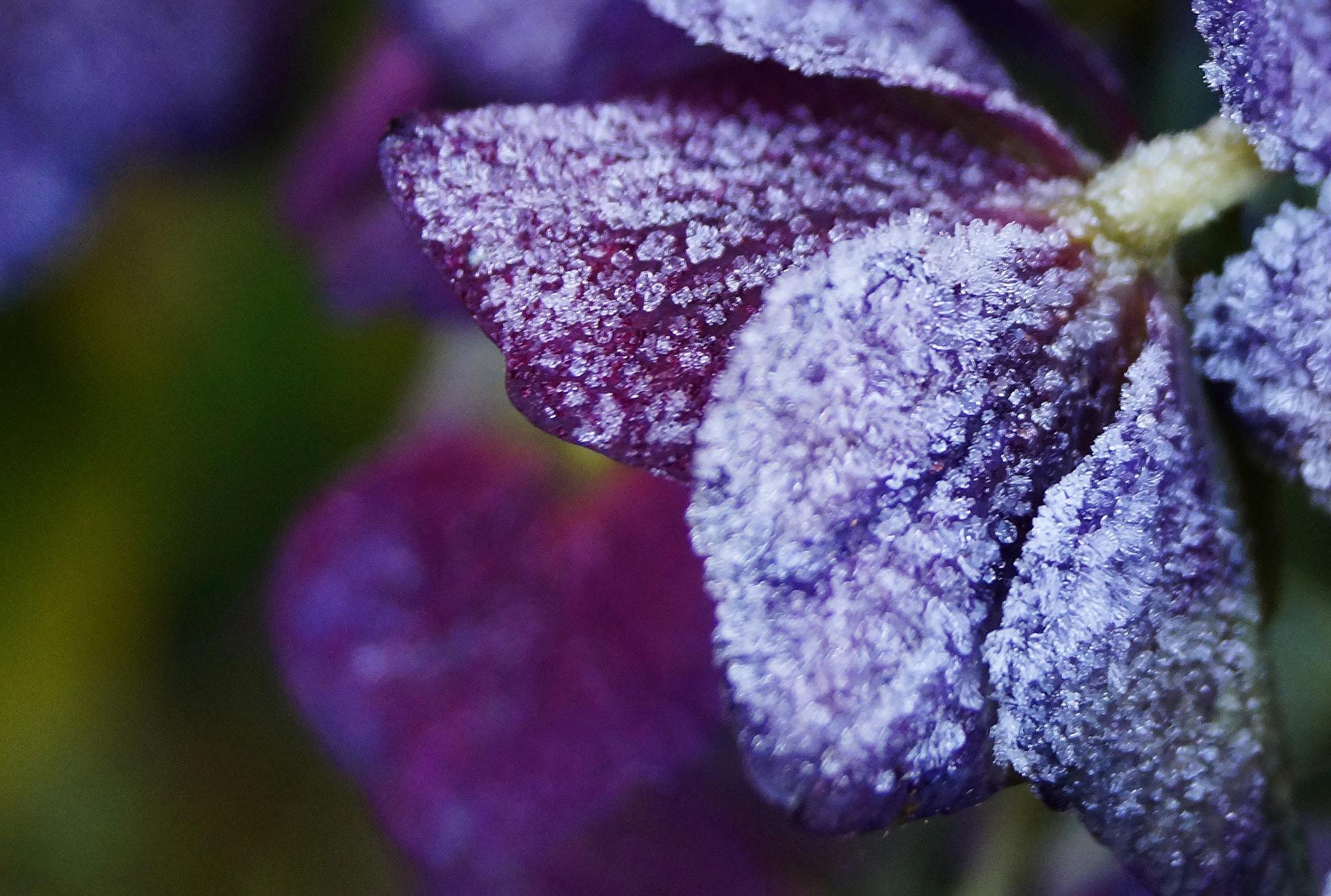 Frozen by Marian Baay