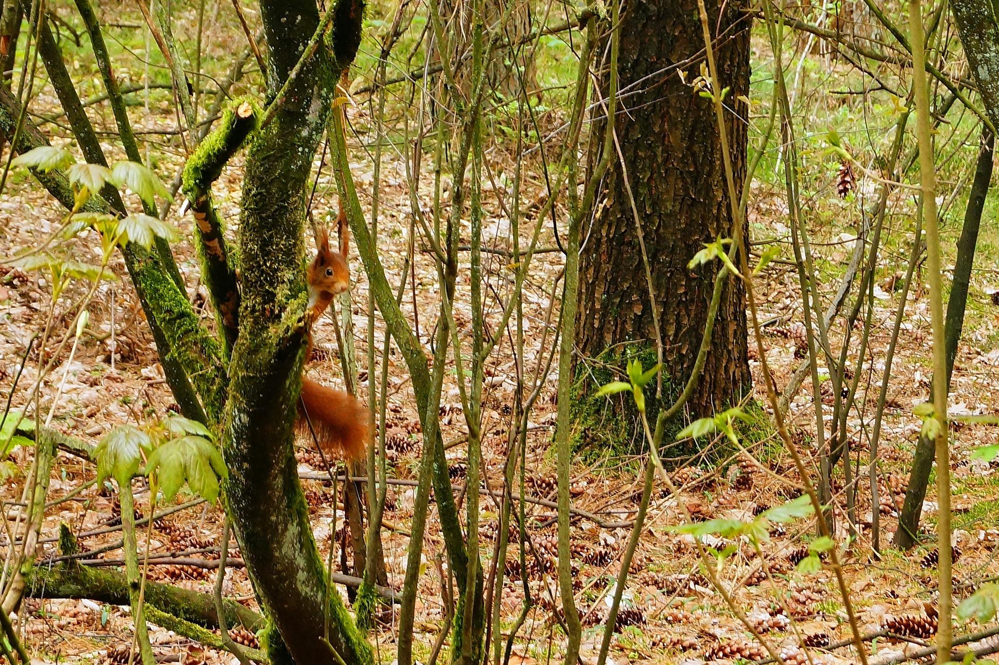 Squirrel by Marian Baay