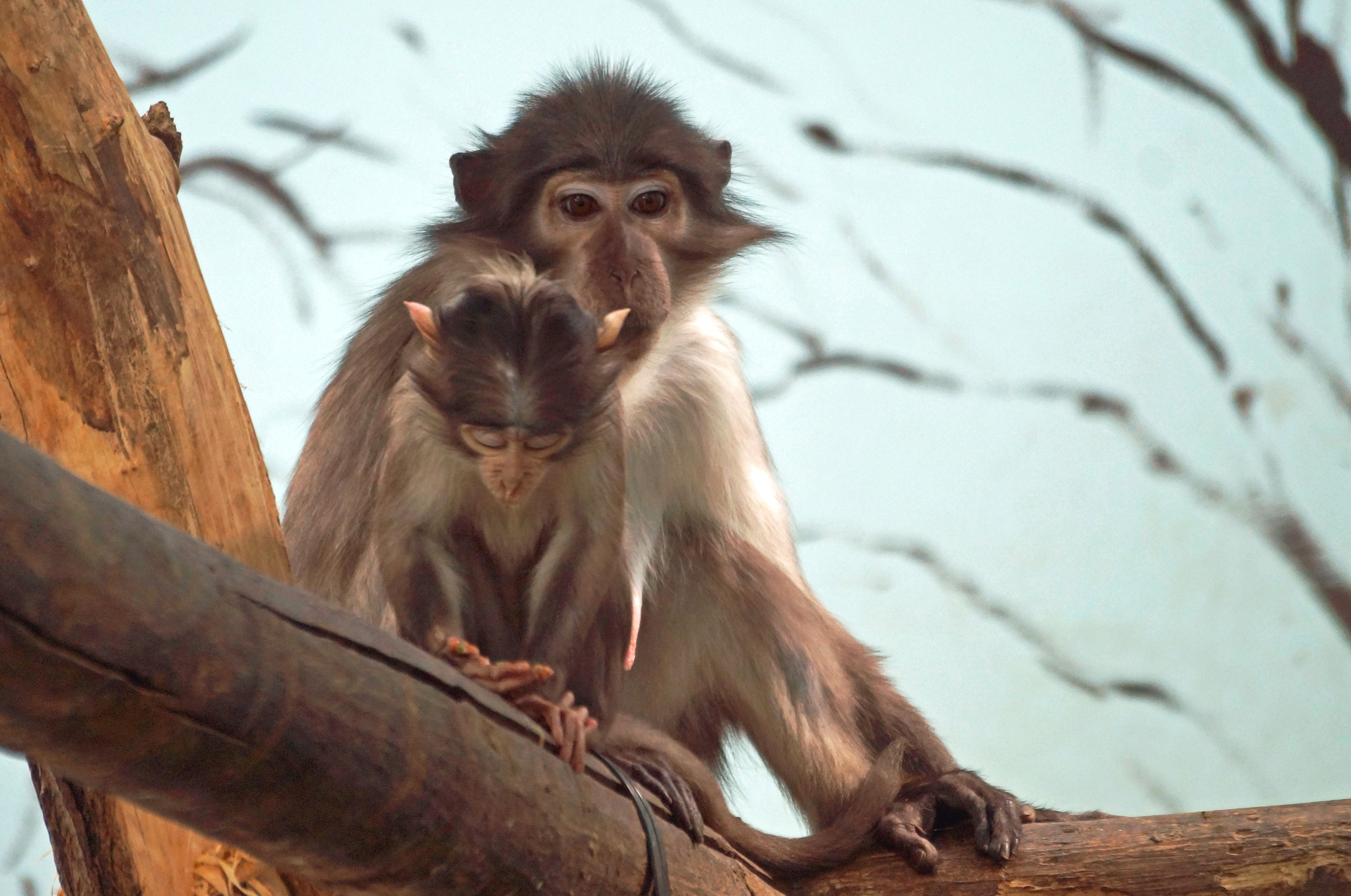 Monkey and Baby by Marian Baay