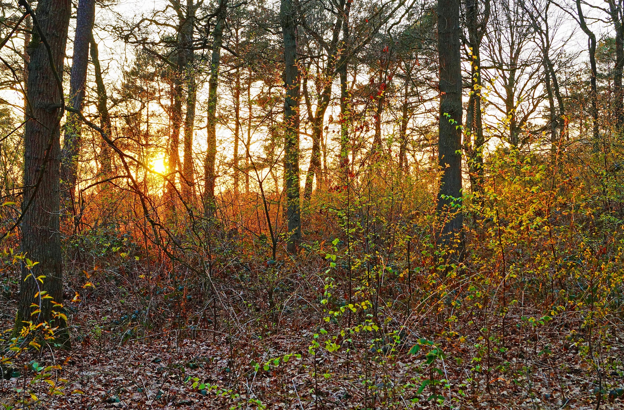 Sunset in the Woods by Marian Baay