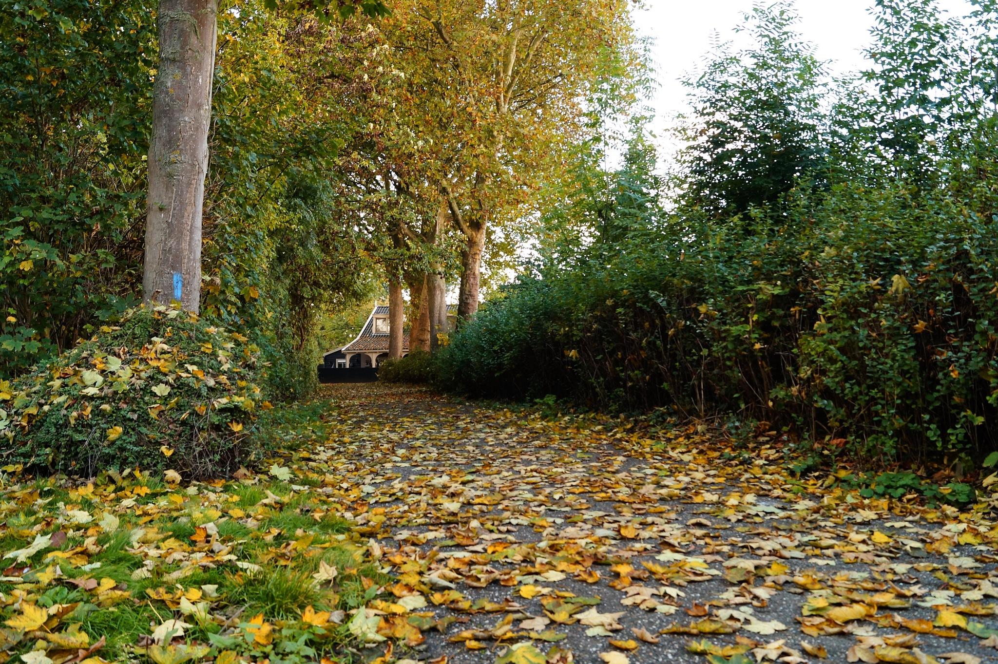 Autumn Path by Marian Baay