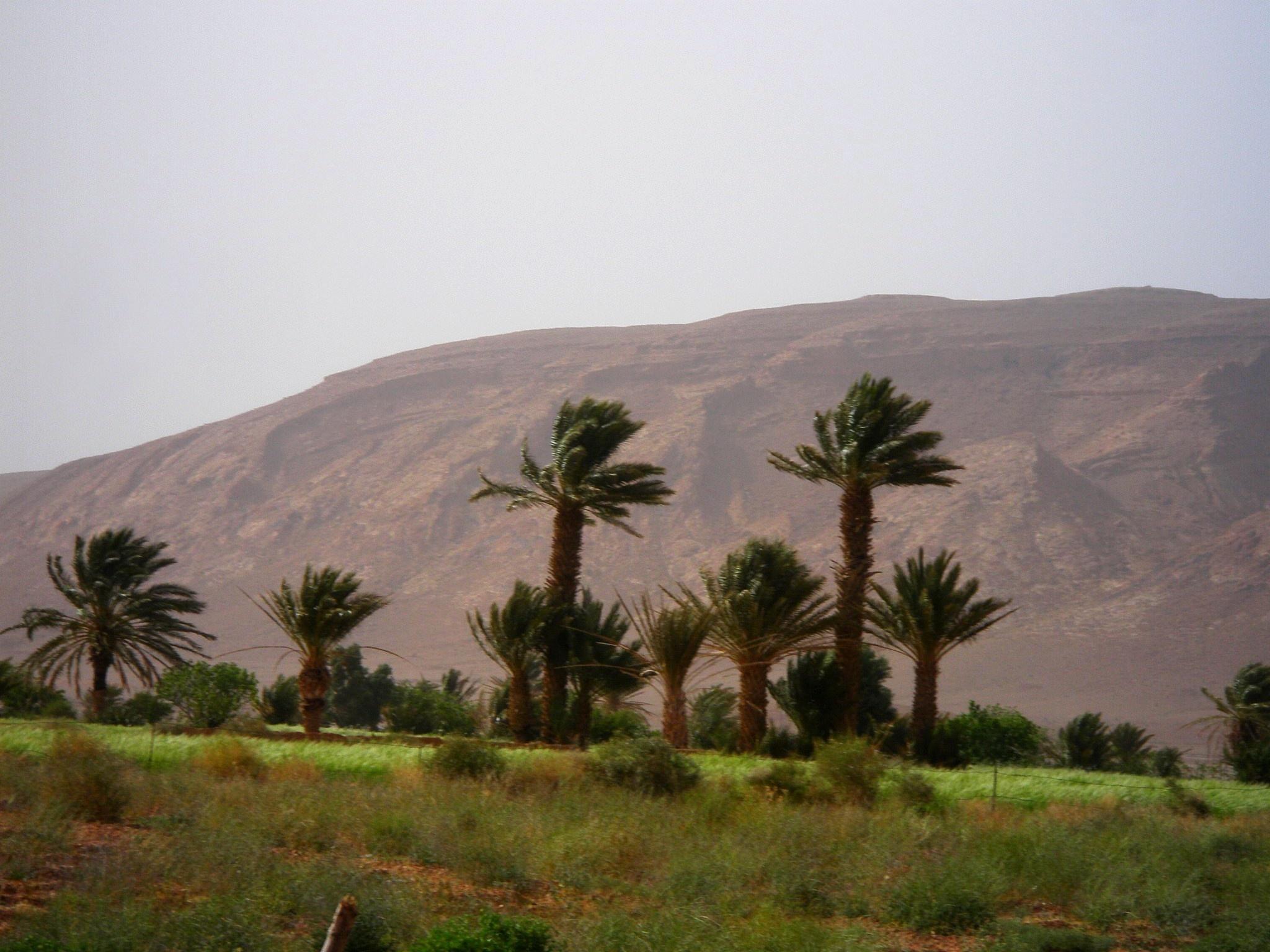 Photo in Travel #oasis #saoura #bechar #sahara #algerie #algeria