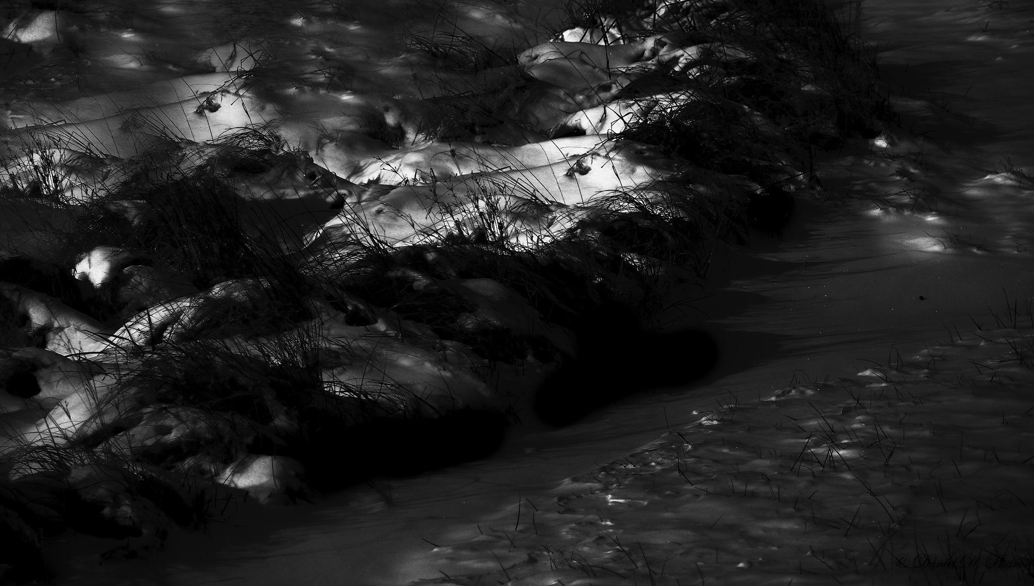 On Light's Edge by danphares