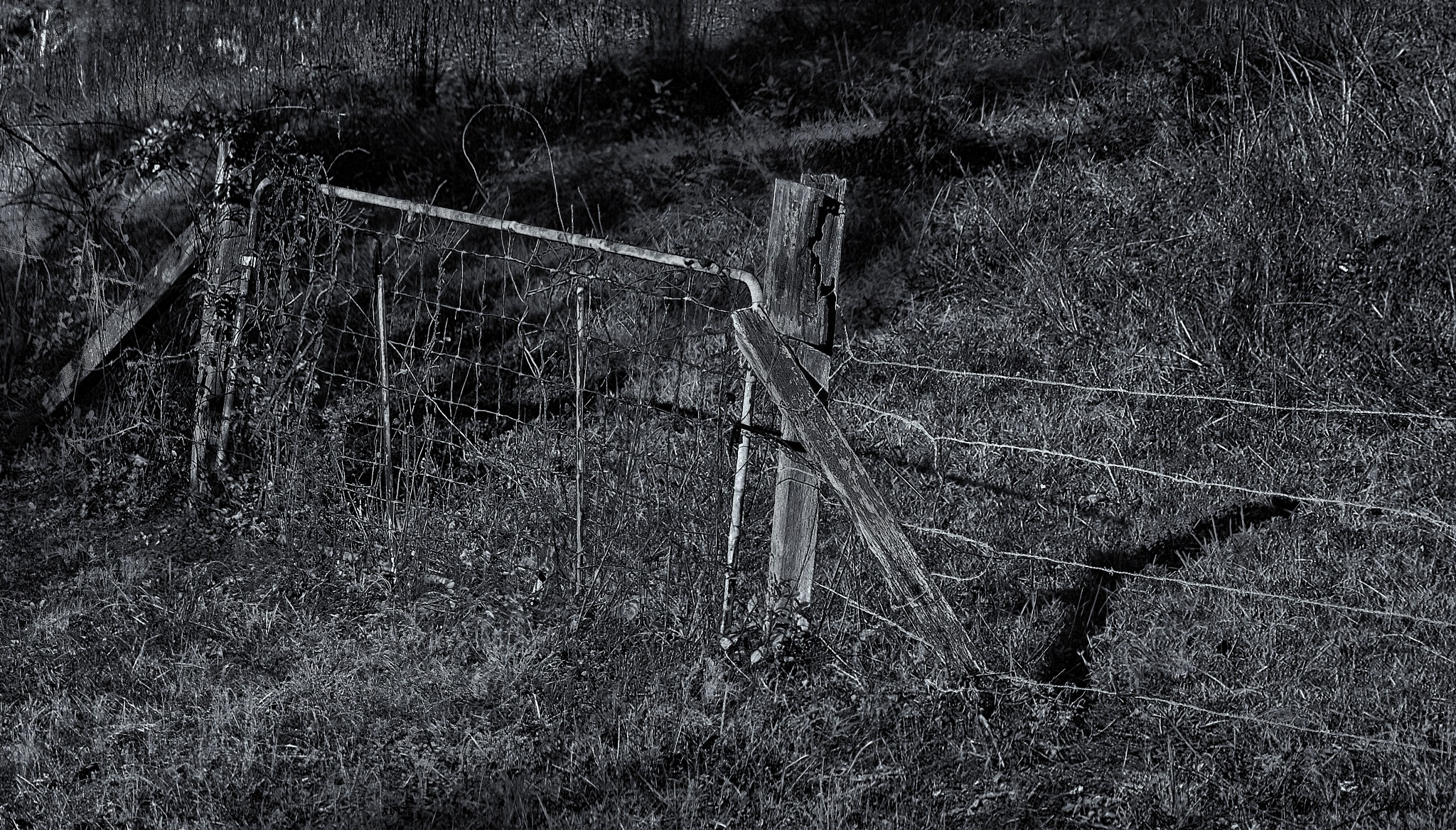 An Old Gate & Barbed Wire by danphares