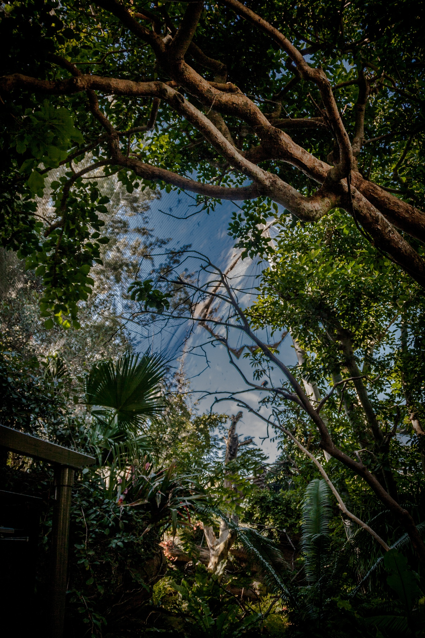 Photo in Nature #nature #sky #zoo #plants #trees #clouds