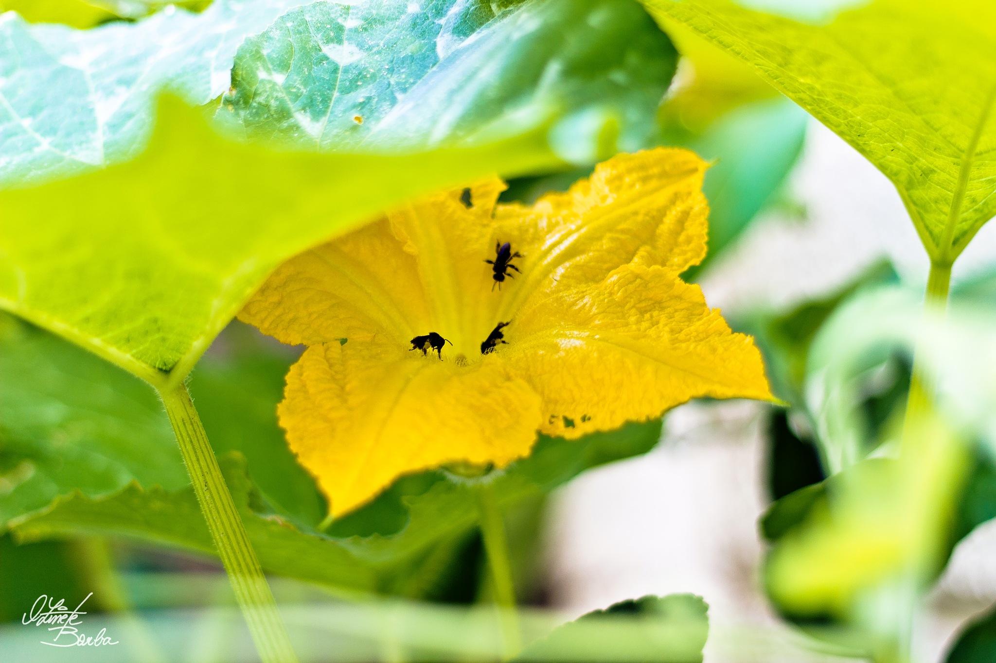 Flores do meu jardim by Oz Borba
