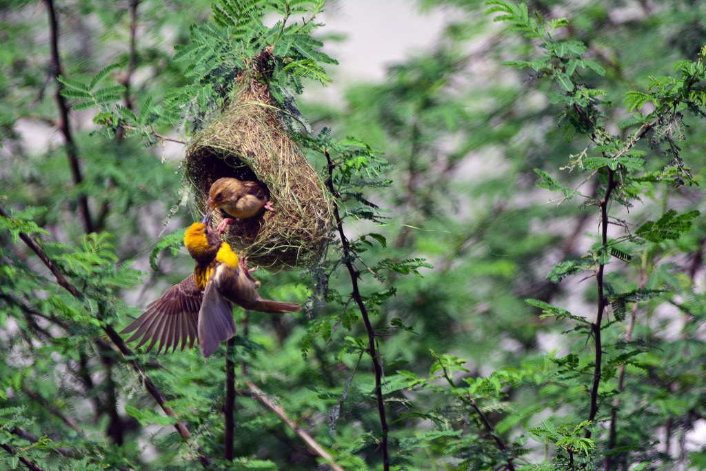 Untitled by Manoj Musale Cameraman