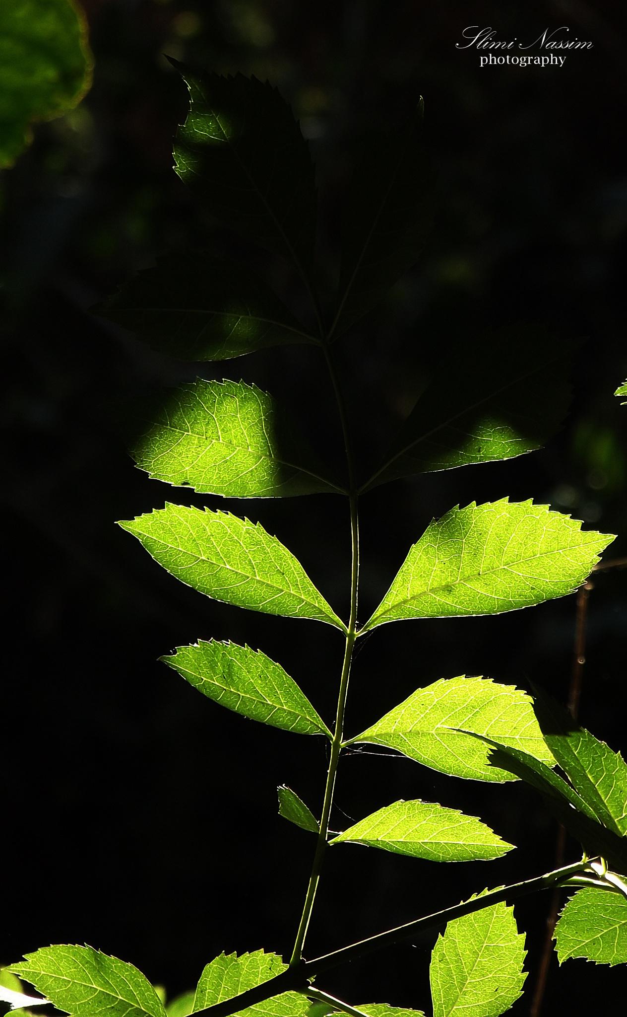 greenleaf by Nassim Slimi