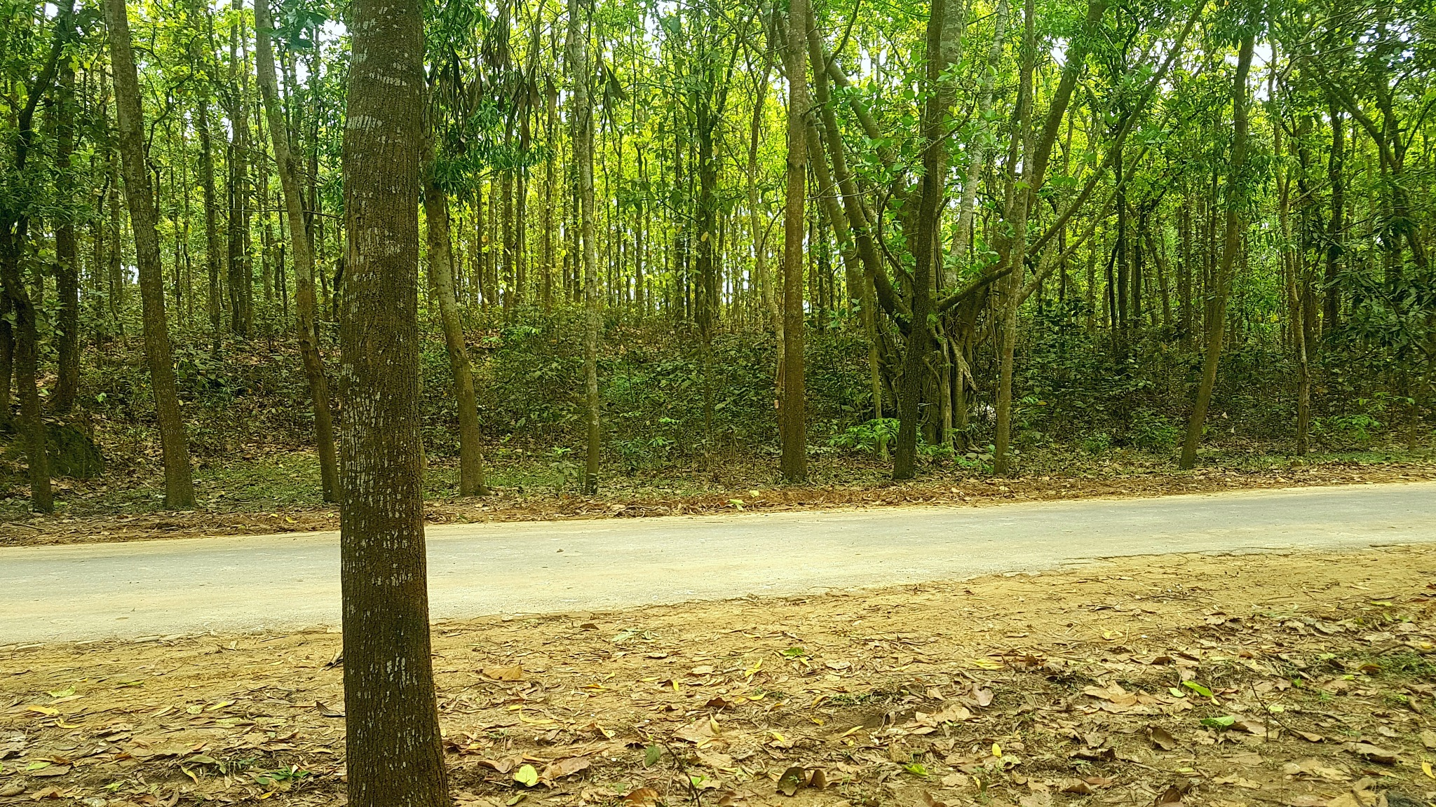 Bhaowal Jungle by Md Golam Murshed