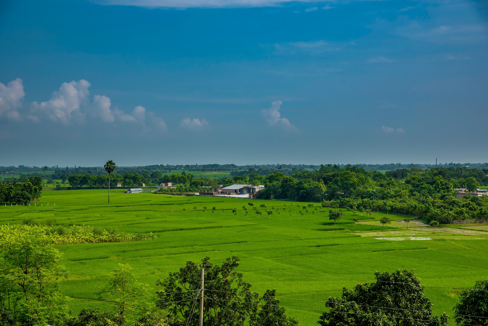 The green by Md Golam Murshed