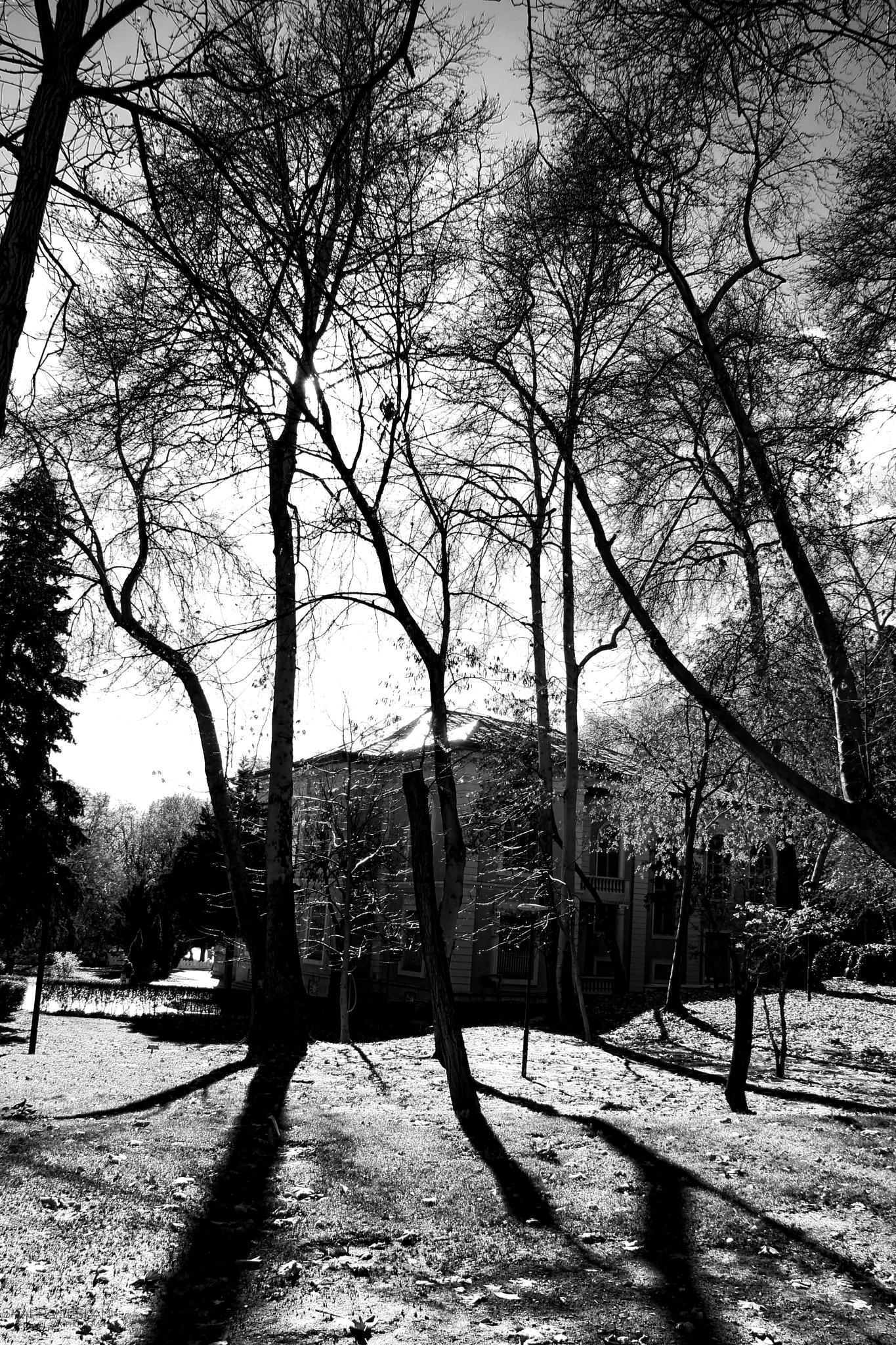 Photo in Random #bnw #art #trees #sunlight #nature #travel #hut #contrast #sky #lake #black and white #dark