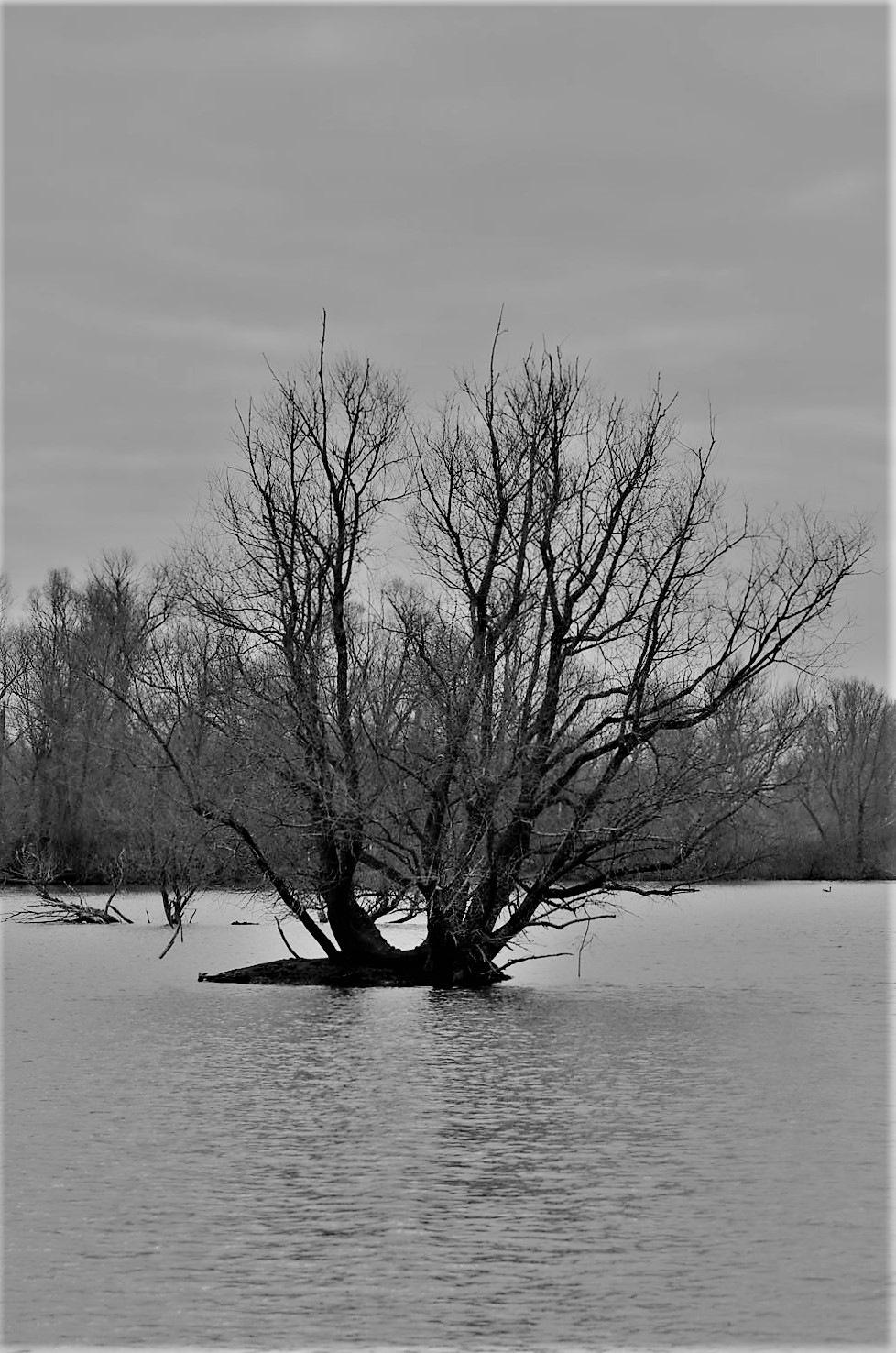 tree by Fotografie Wishaupt