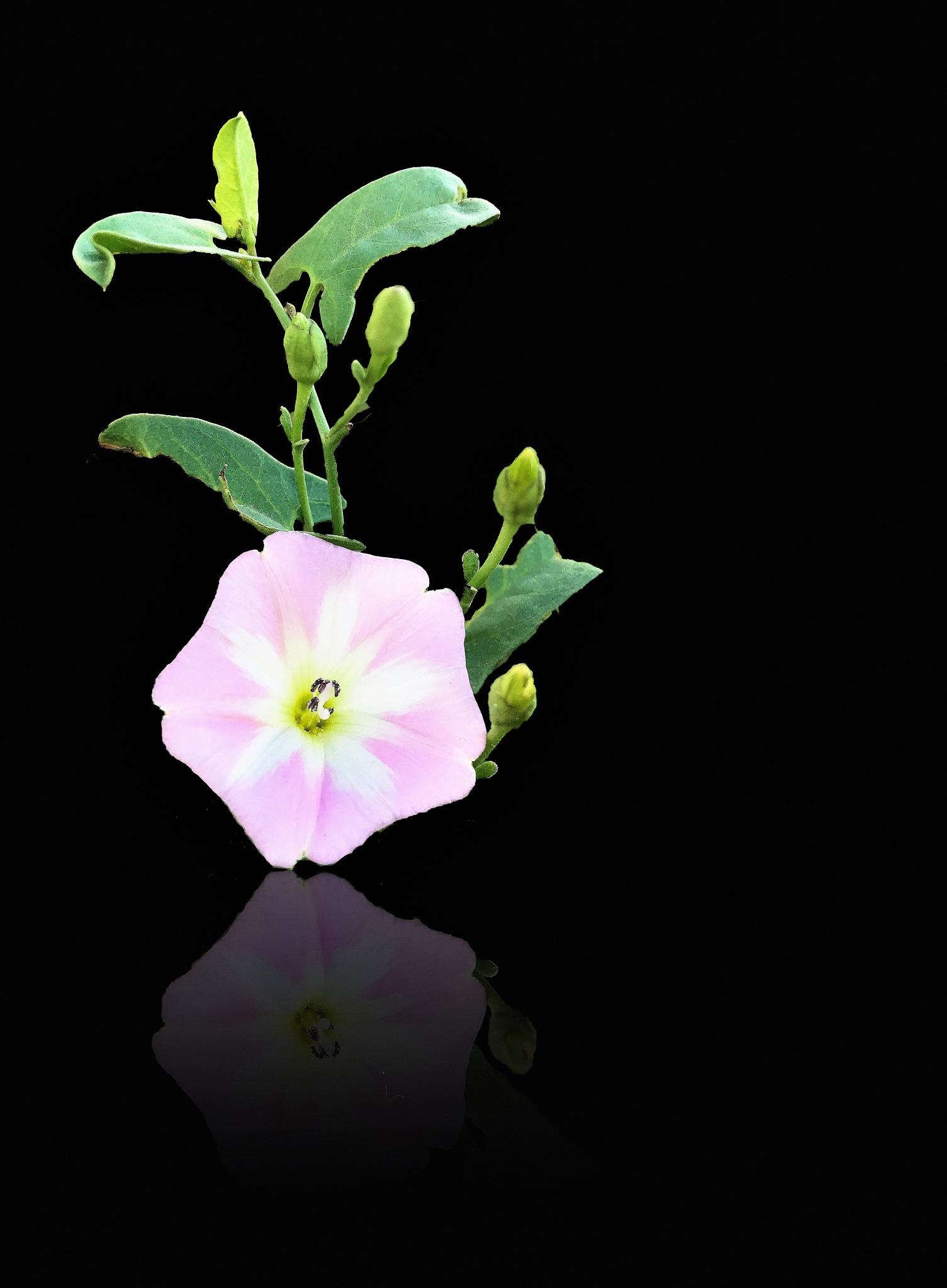 pink,green,black by osama ali mhmoud