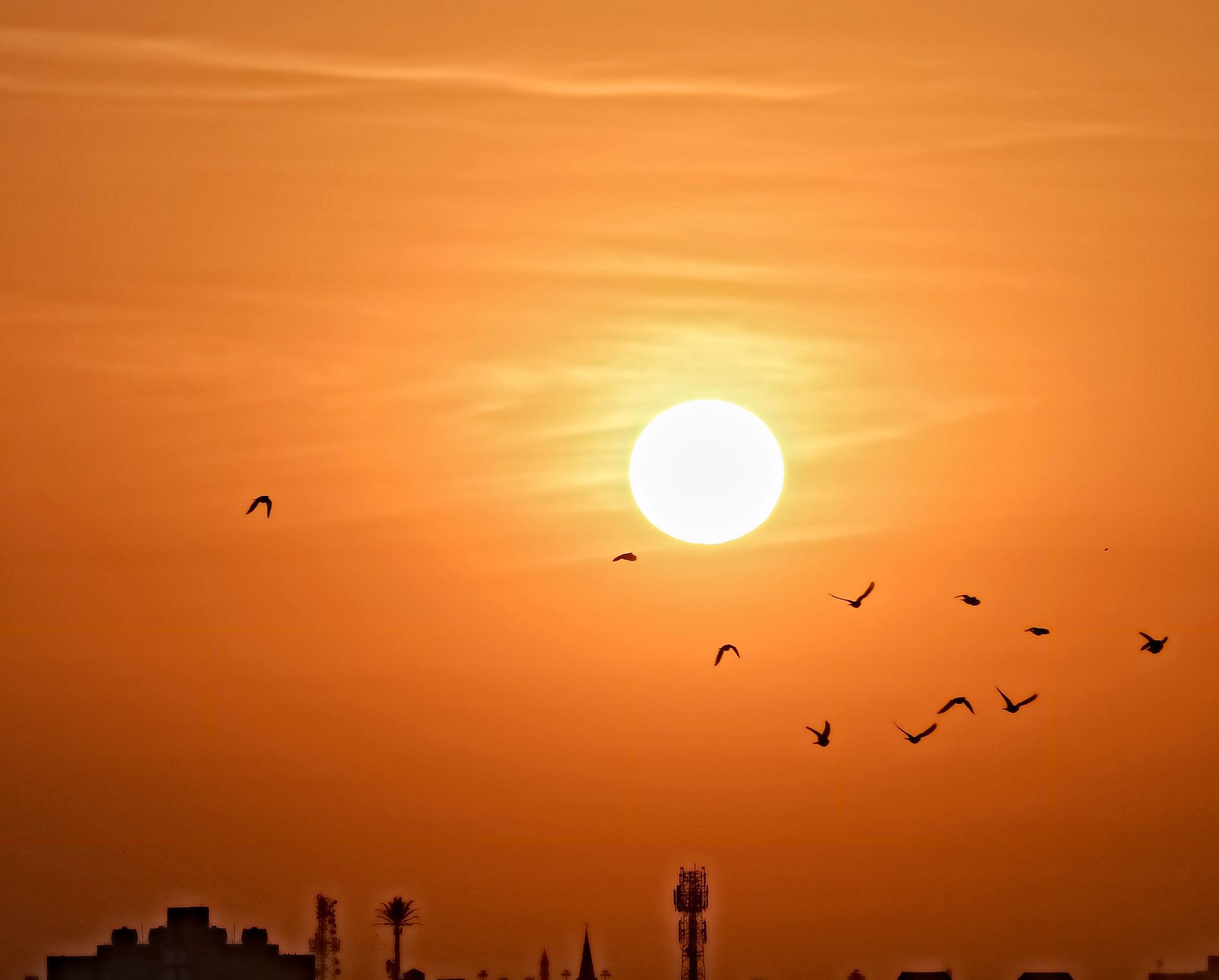 Sun&Birds by osama ali mhmoud