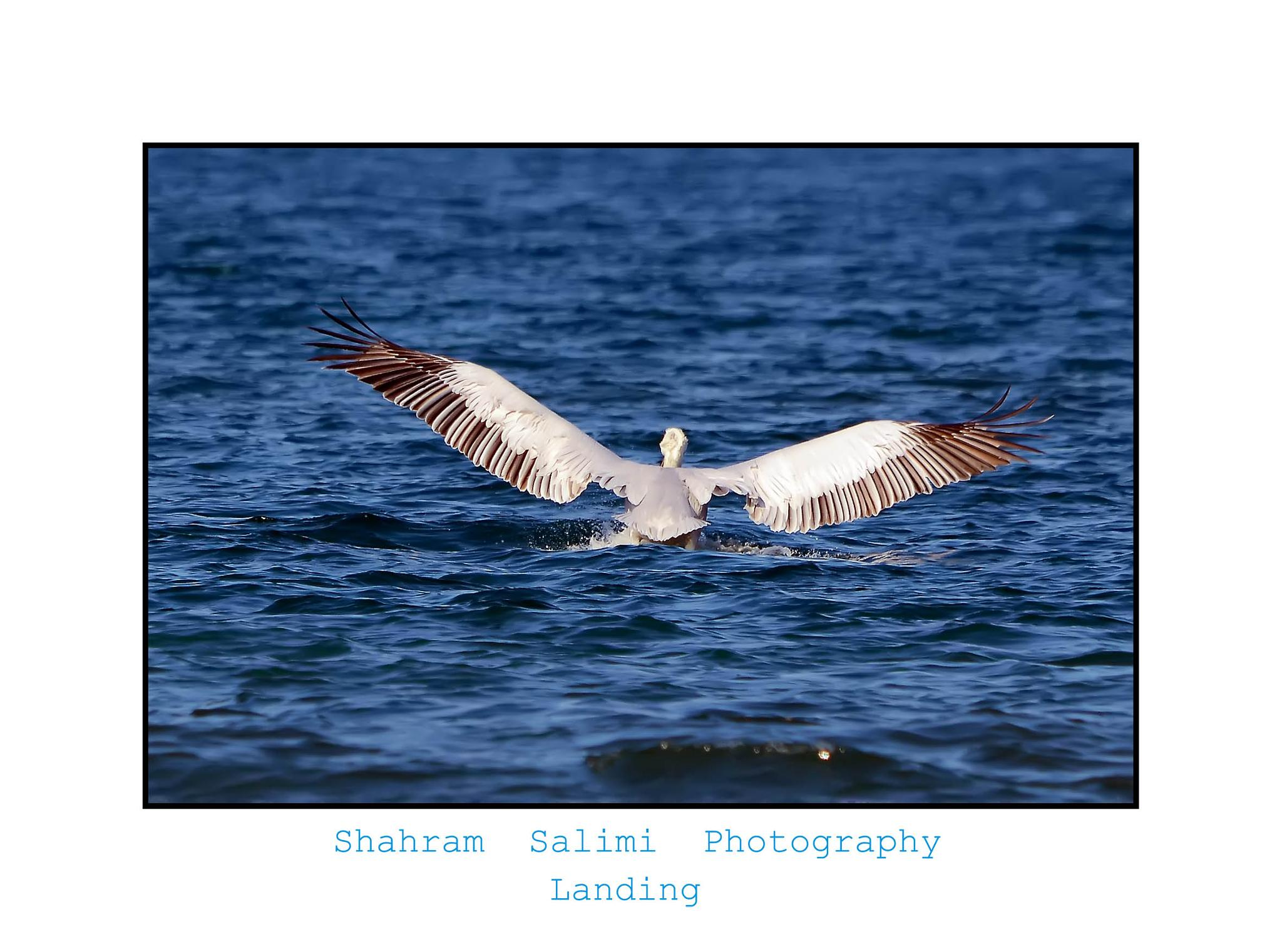 landing by Shahram Salimi