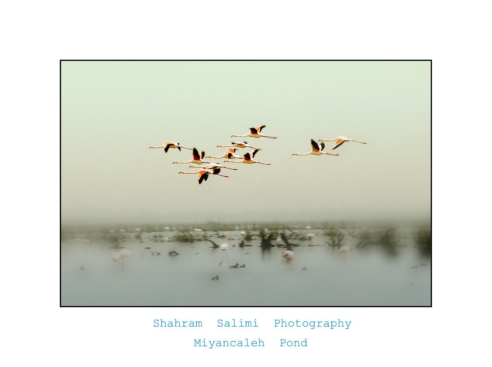 Migration by Shahram Salimi