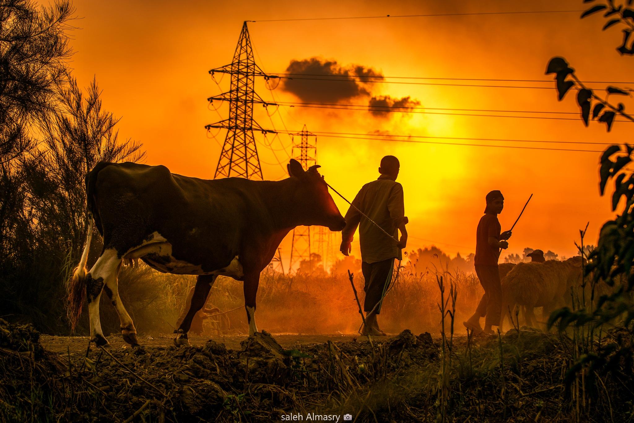 حياة المزارع by Saleh Almasry
