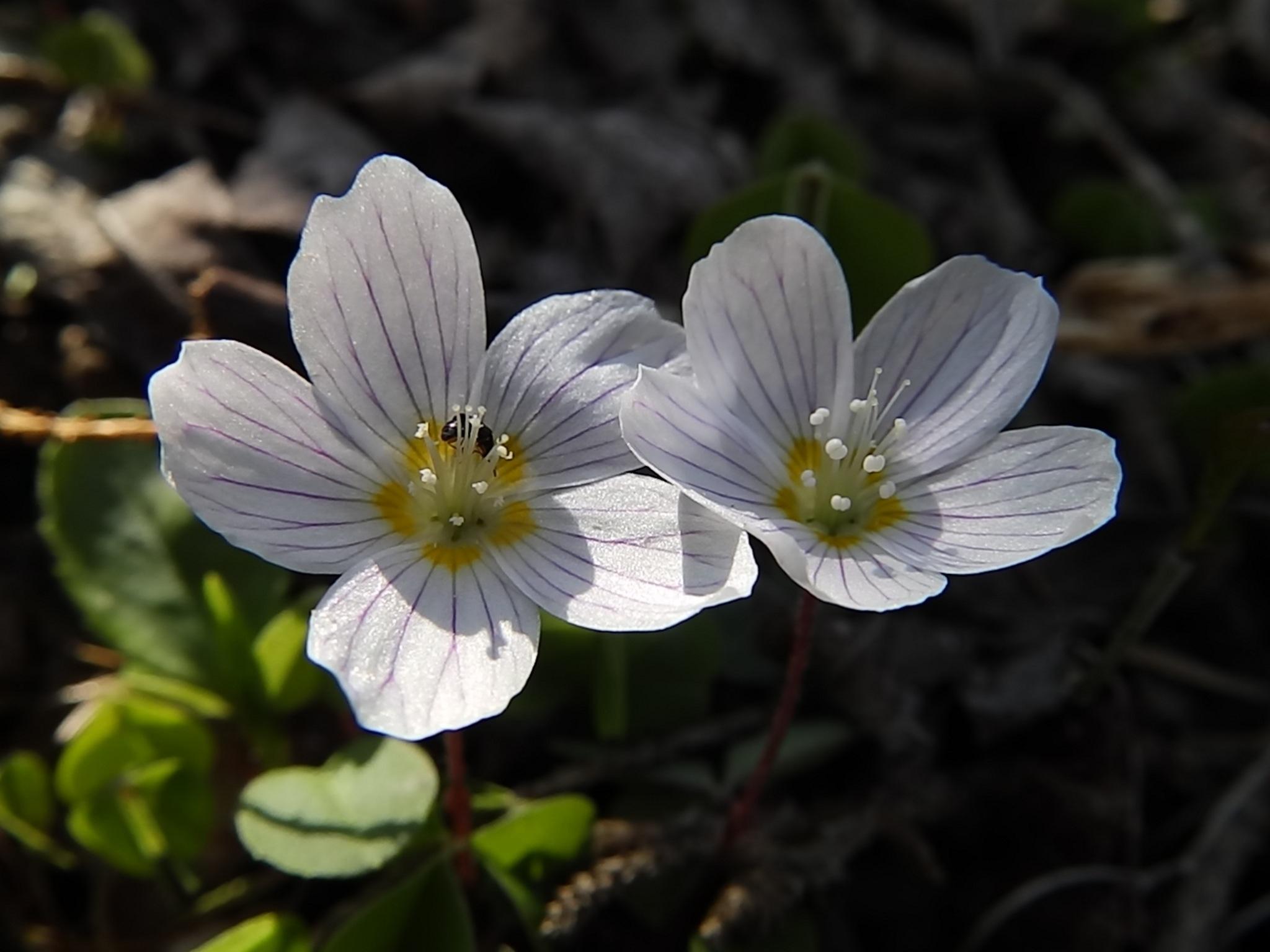 Wiosna  by Dorota Zmysłowska