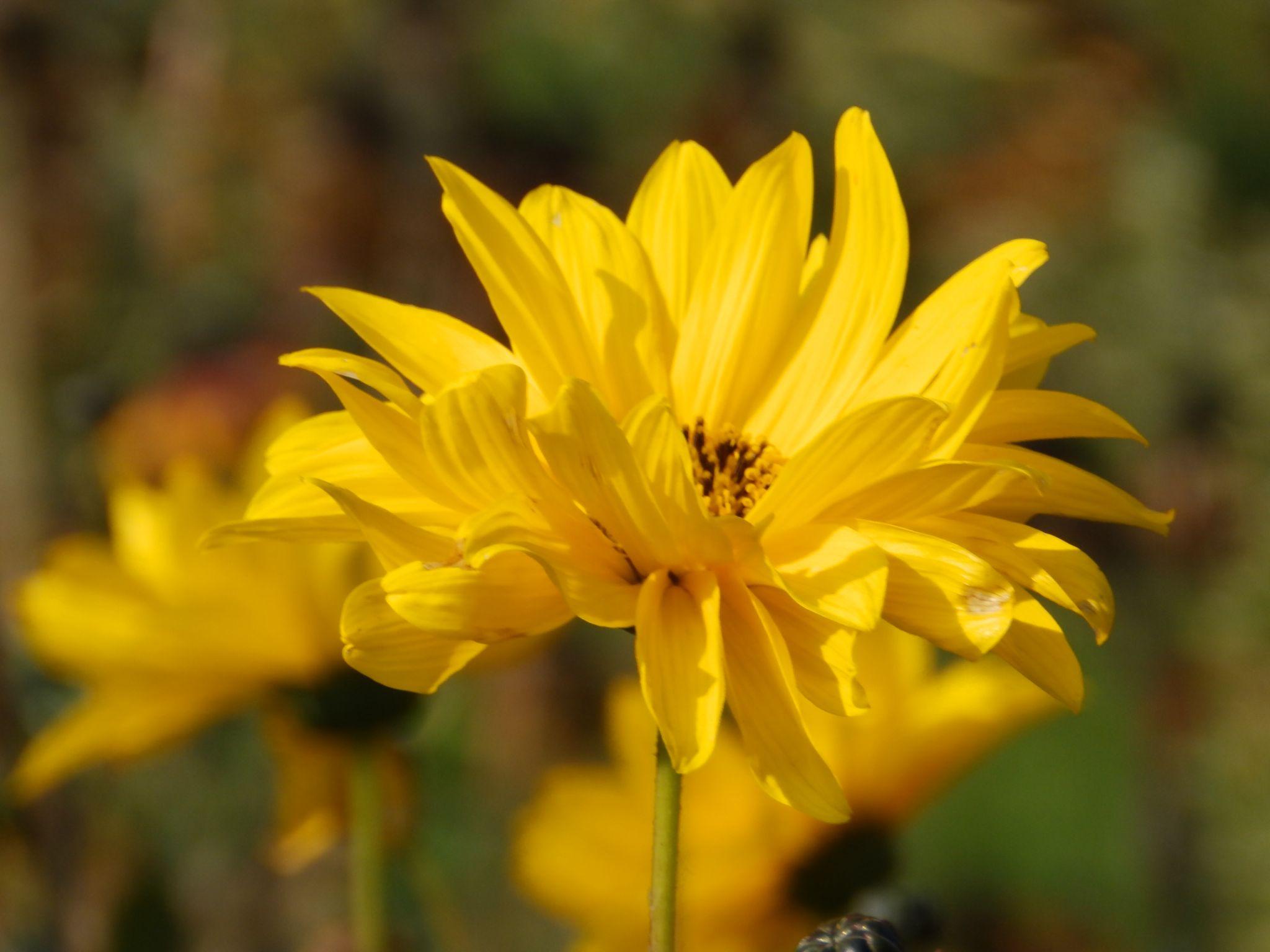 Kwiaty by Dorota Zmysłowska