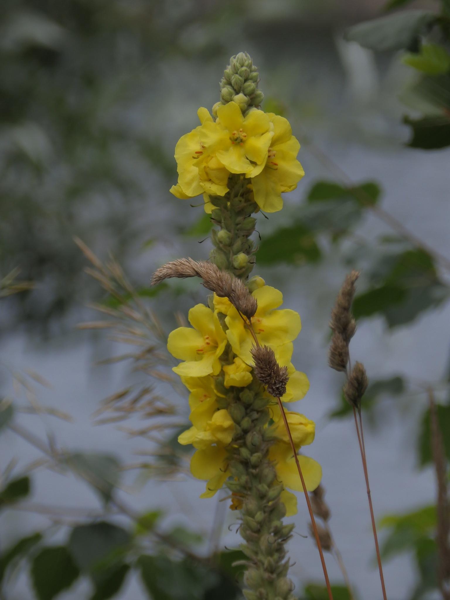 Polne kwiatki by Dorota Zmysłowska