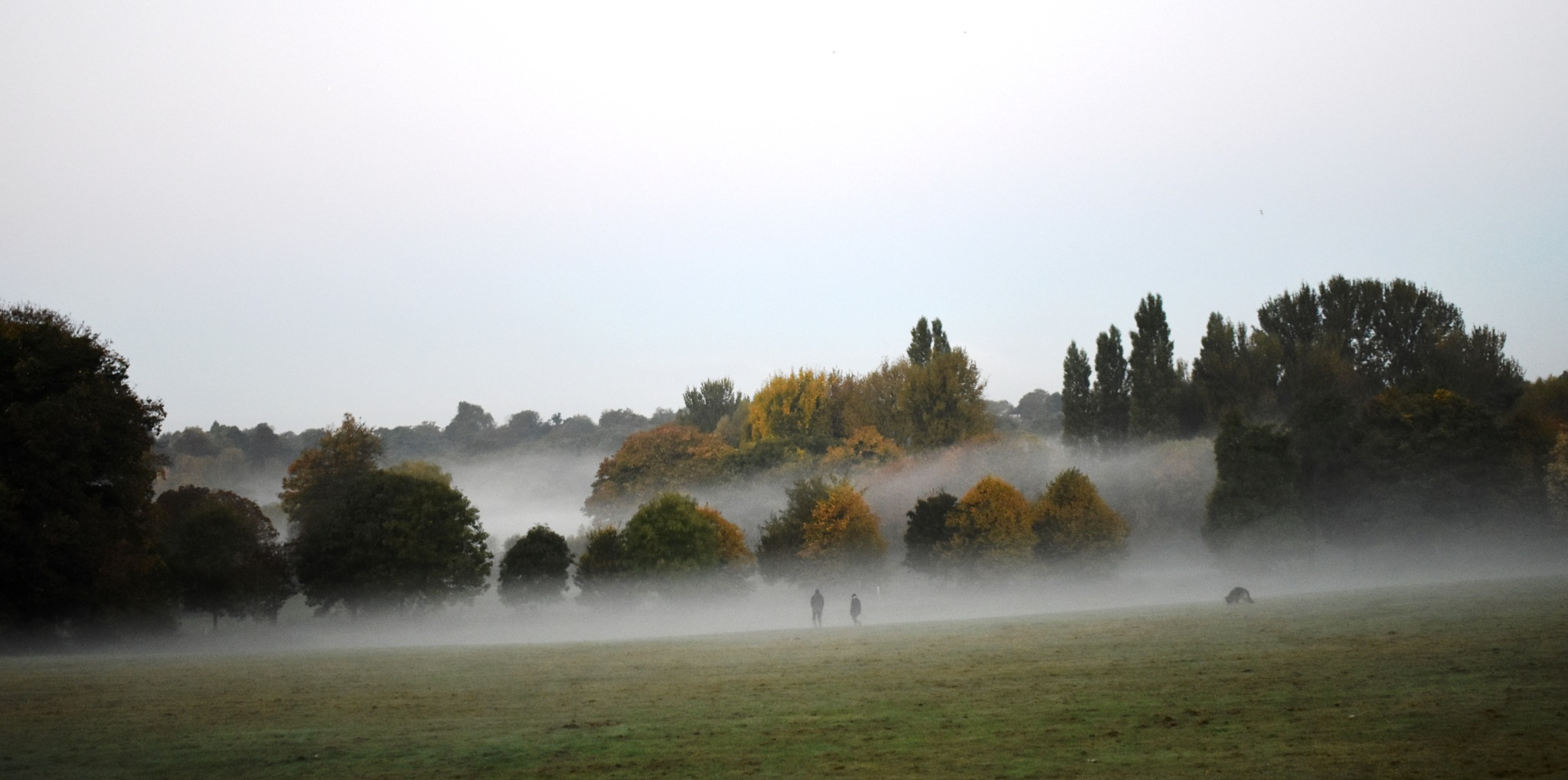 A misty morning at Footscray Meadow by Stephen Ashdown