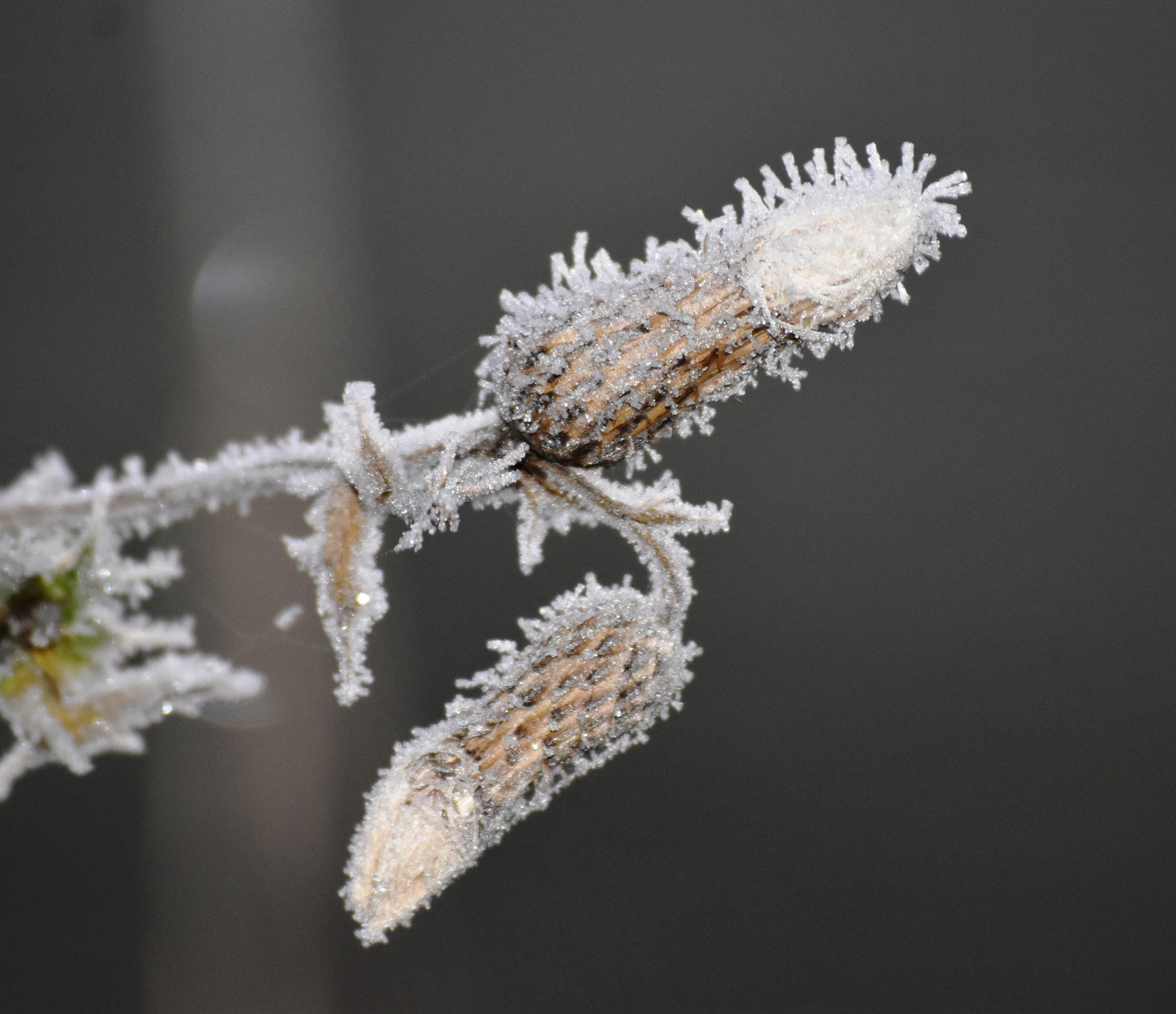It's cold says the plant!! by Stephen Ashdown