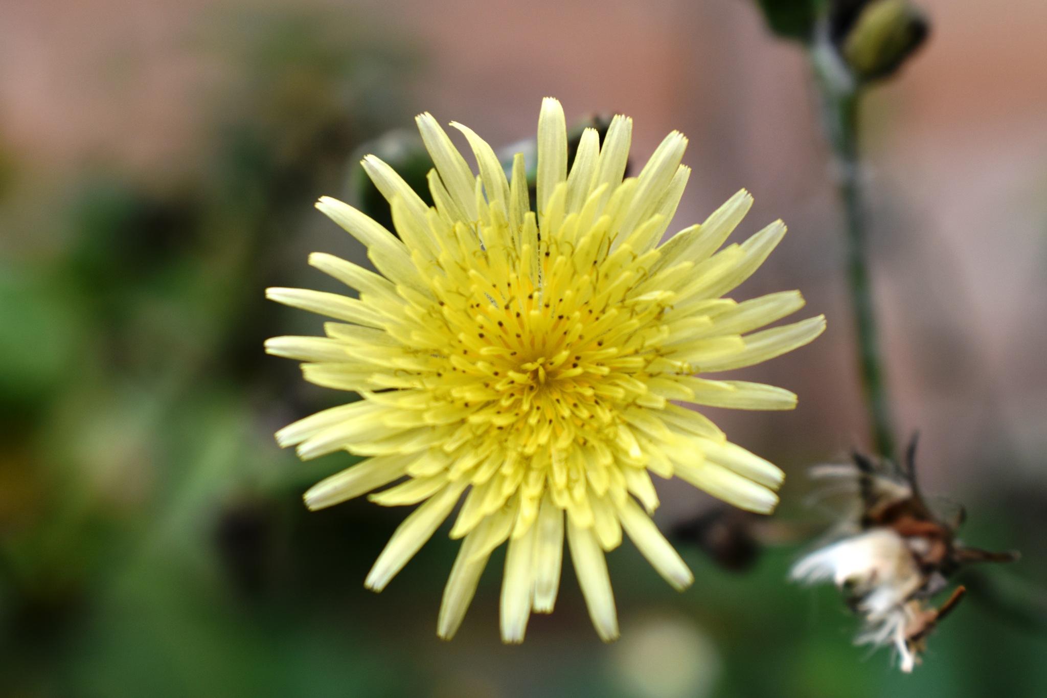 A pretty yellow flower by Stephen Ashdown