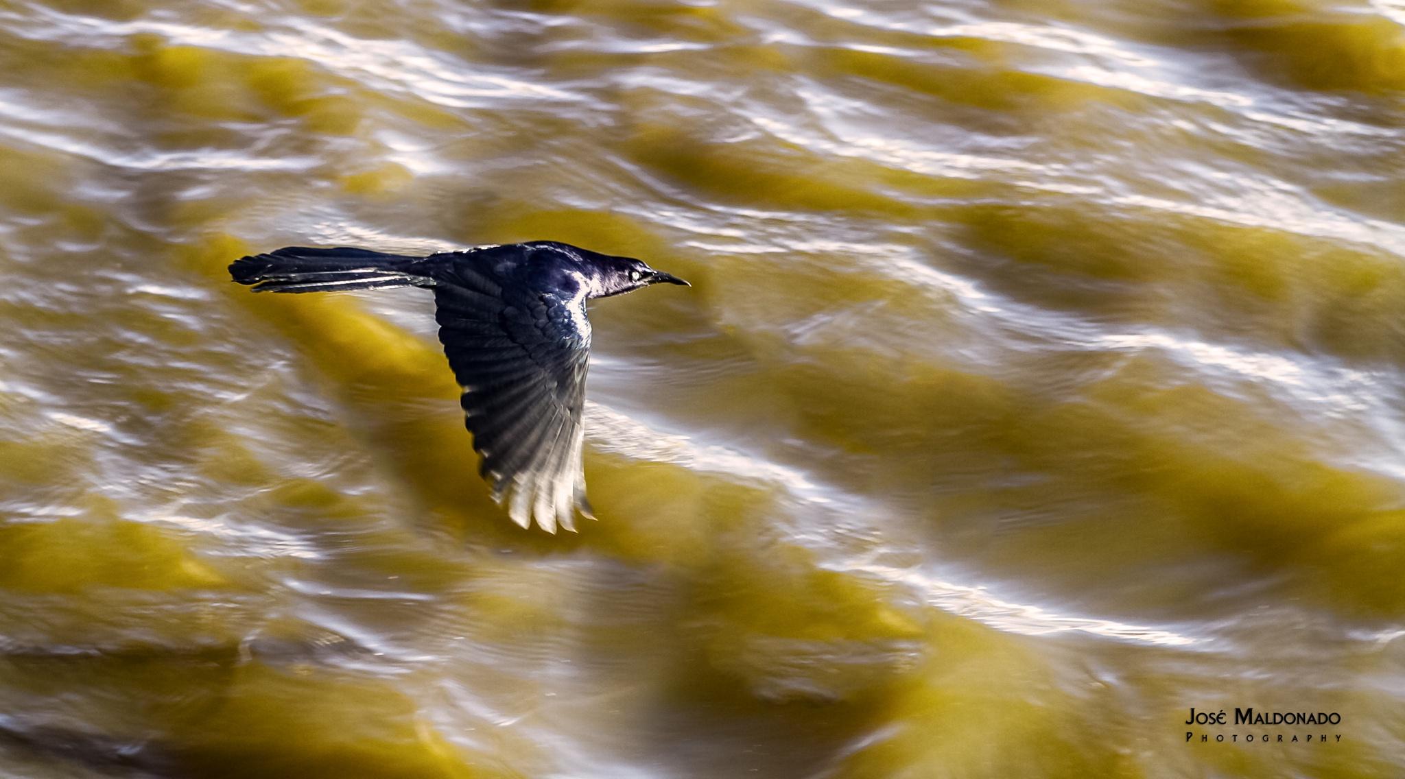 Flying sharp  by Pepe Maldonado