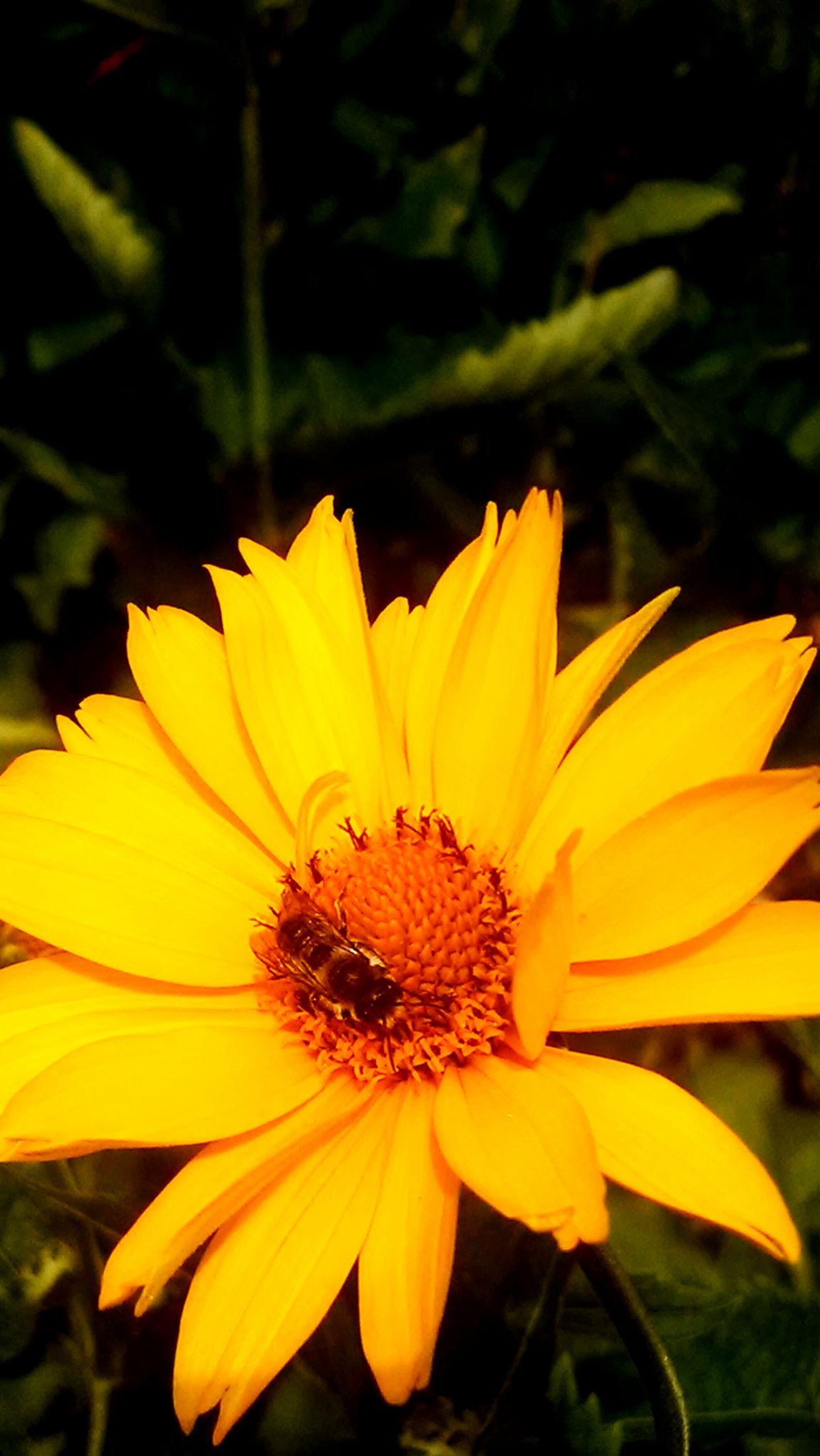 IMG_20140626_165737 by Jim McAvoy