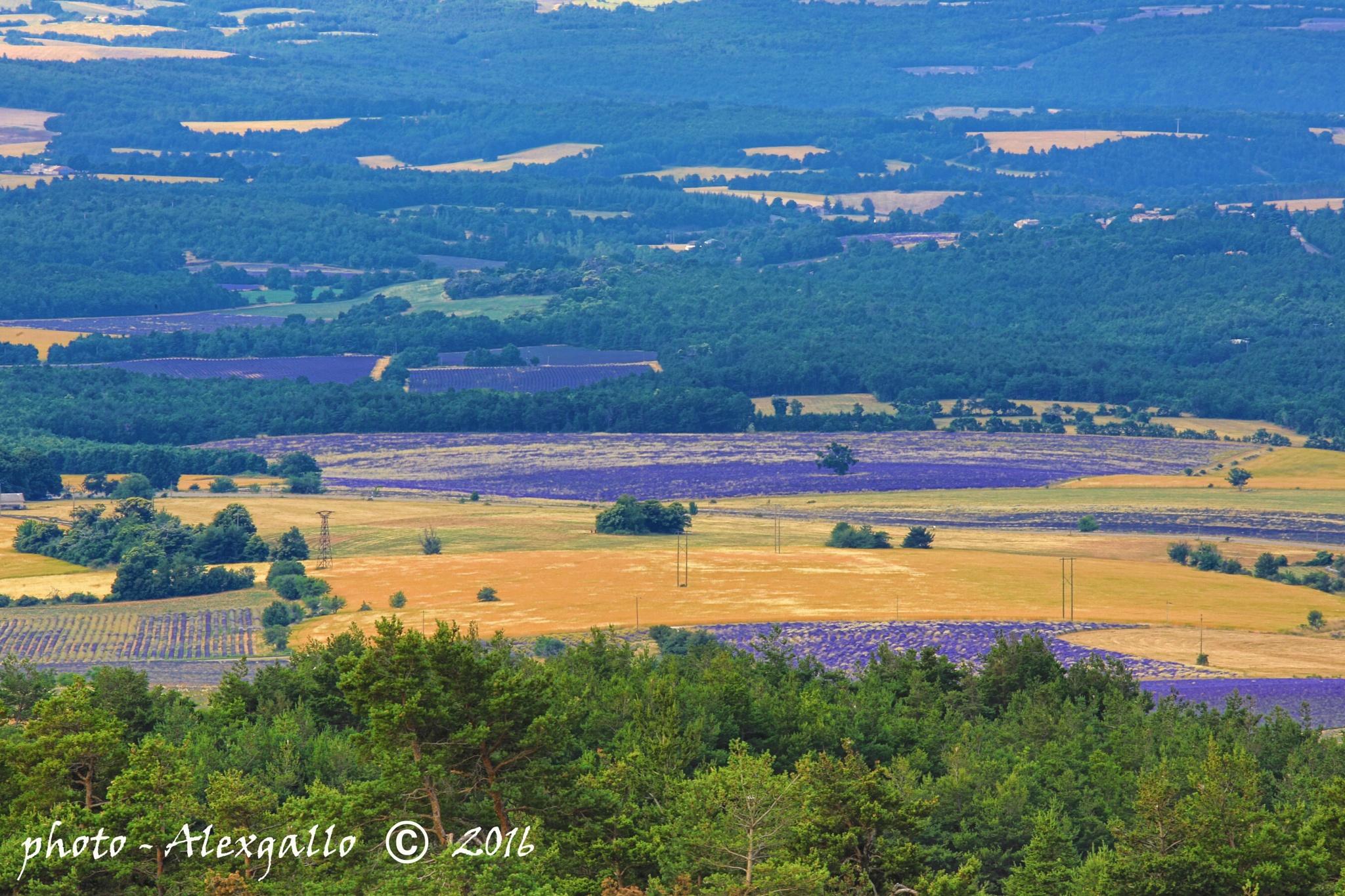 Landscape of Provence by AlexGallo