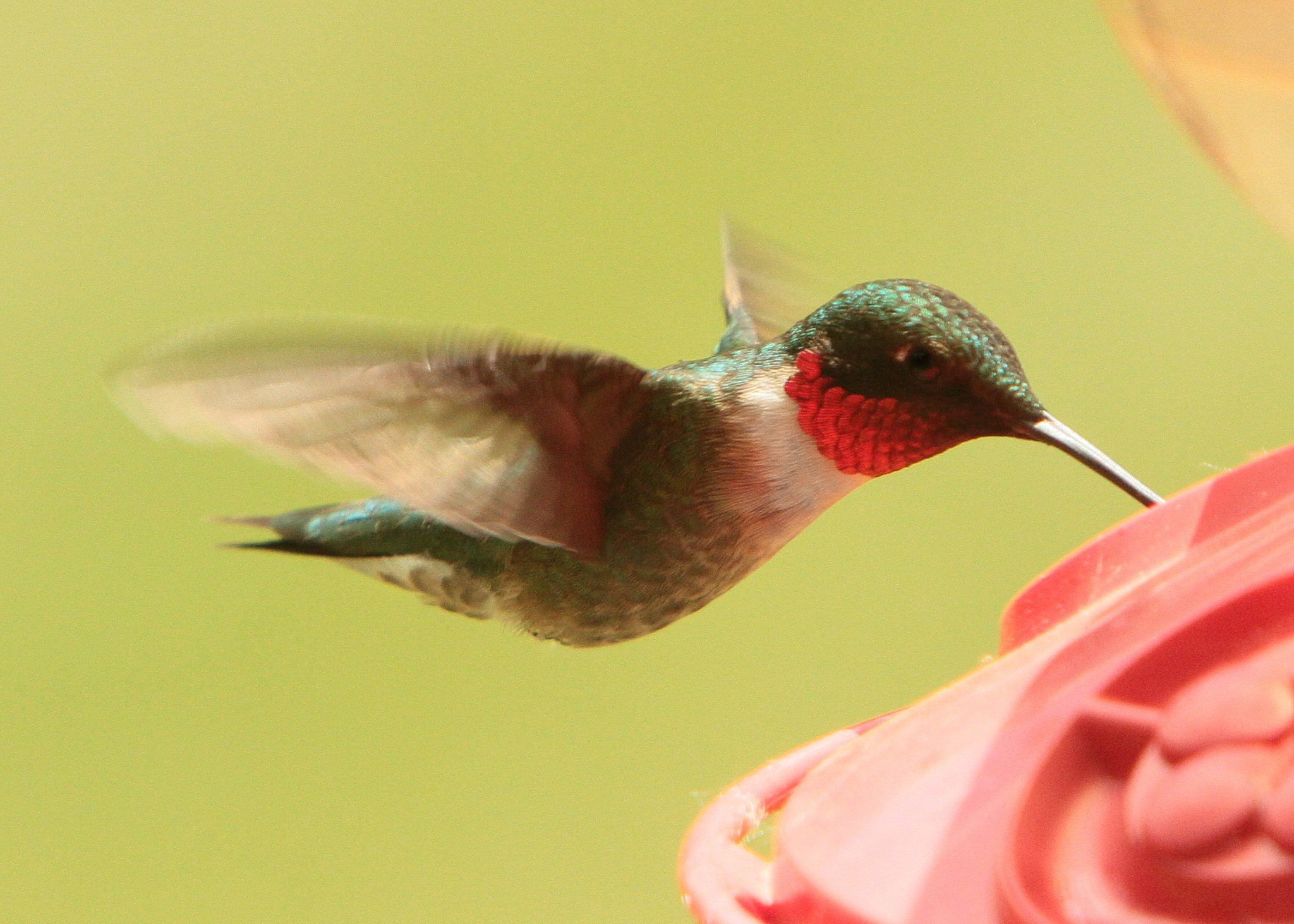 Hummer by Dan Ross