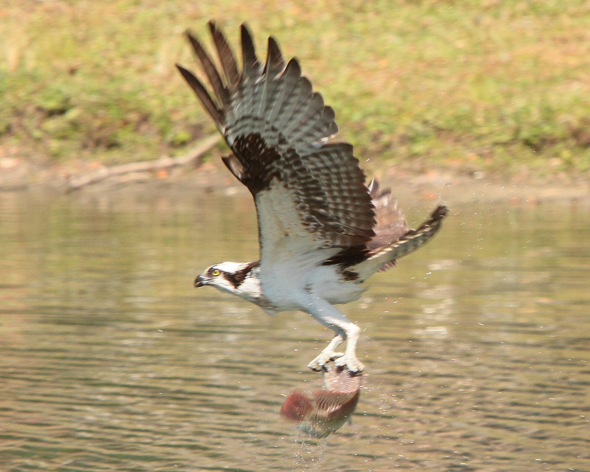 Launching into flight by Dan Ross