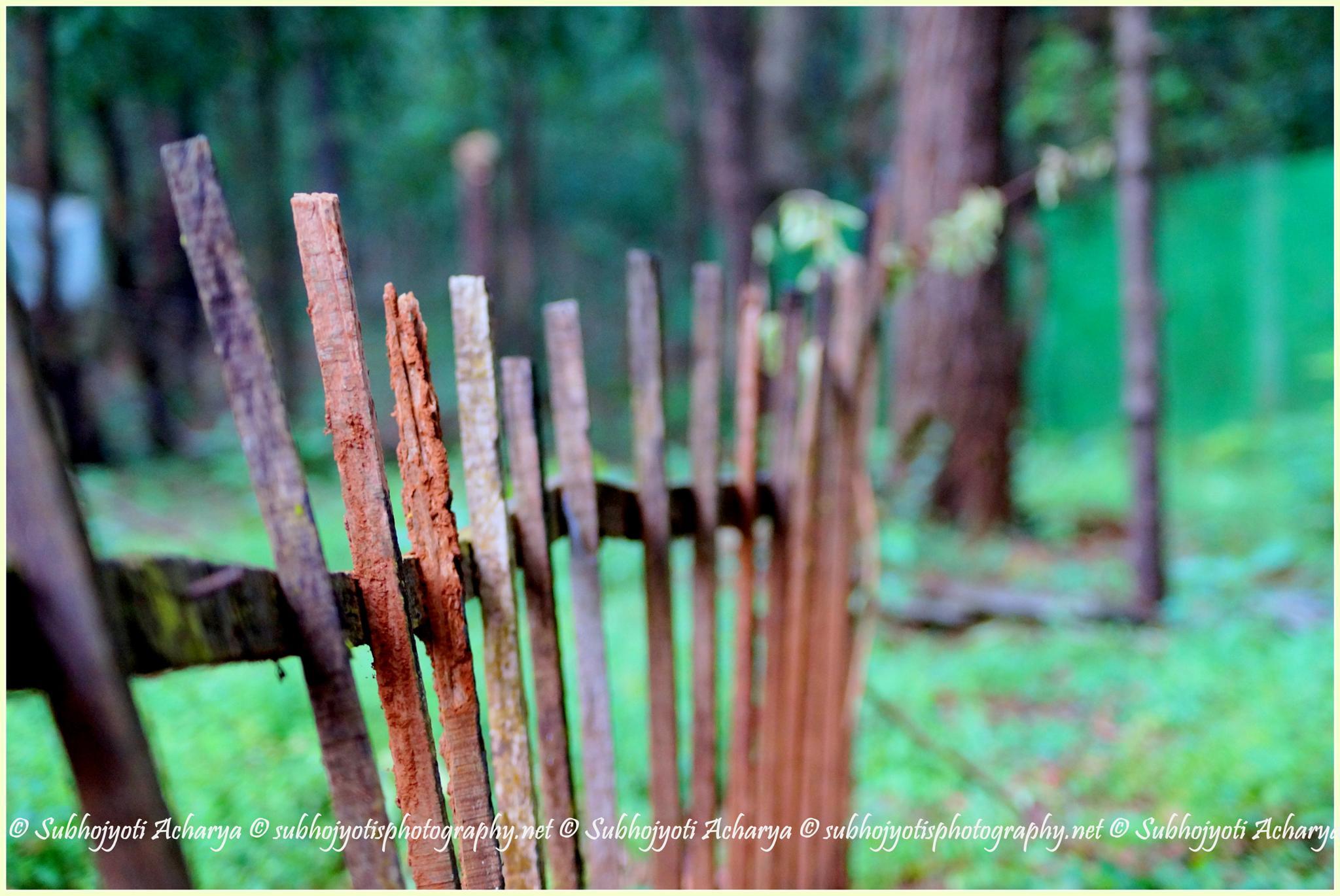 Bars by Subhojyoti Acharya