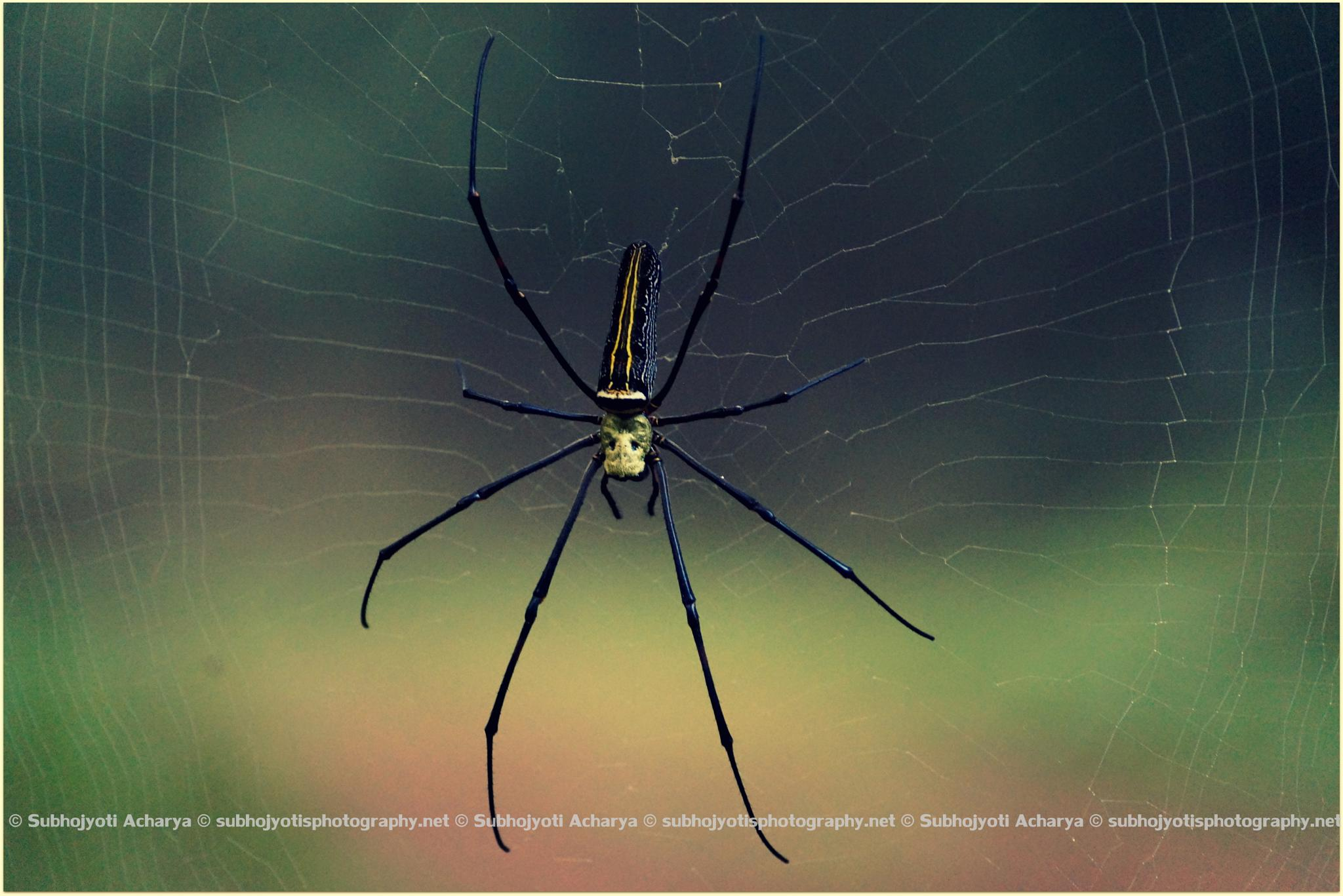 The Web by Subhojyoti Acharya