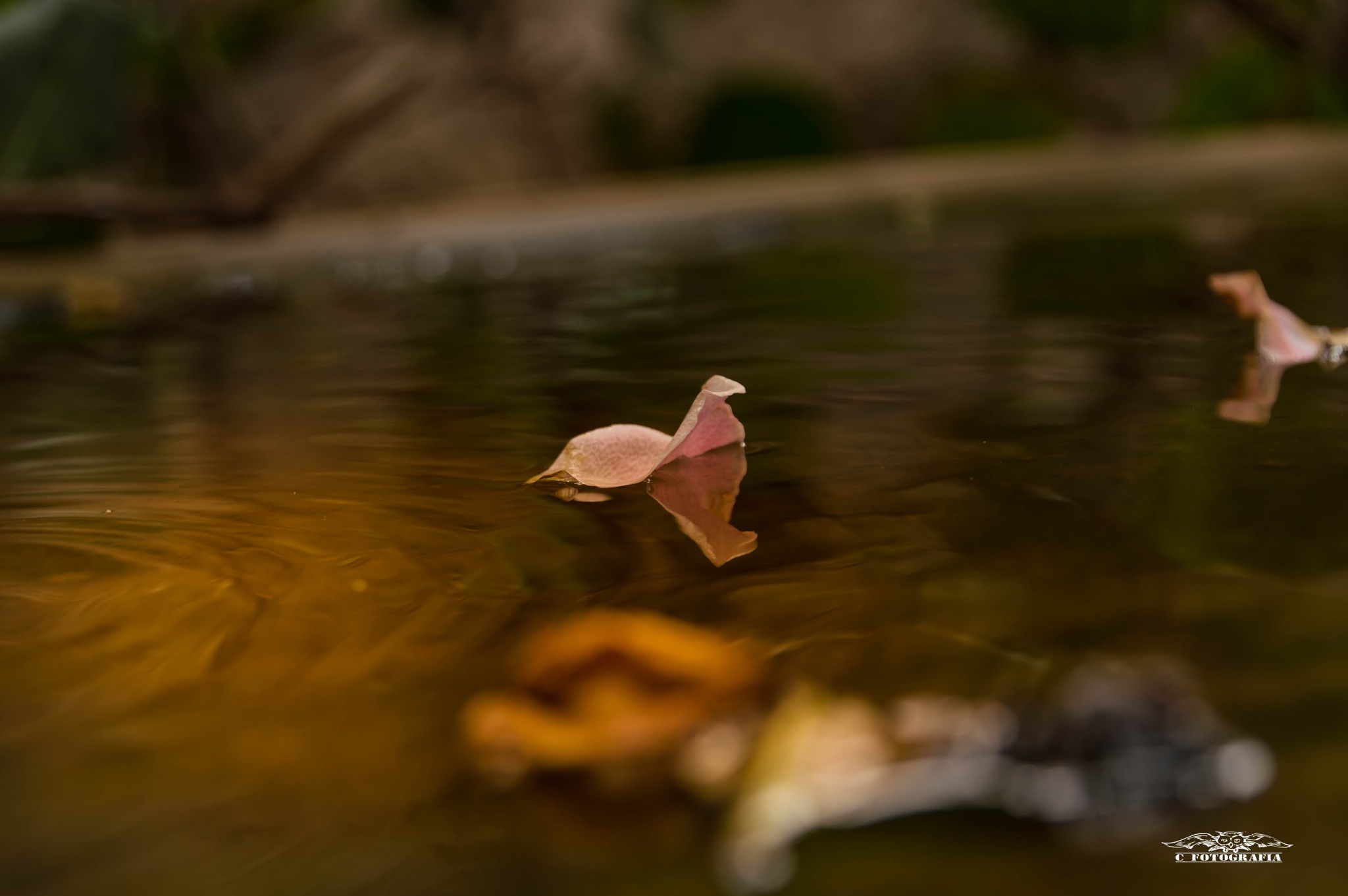 Untitled by cfotografia
