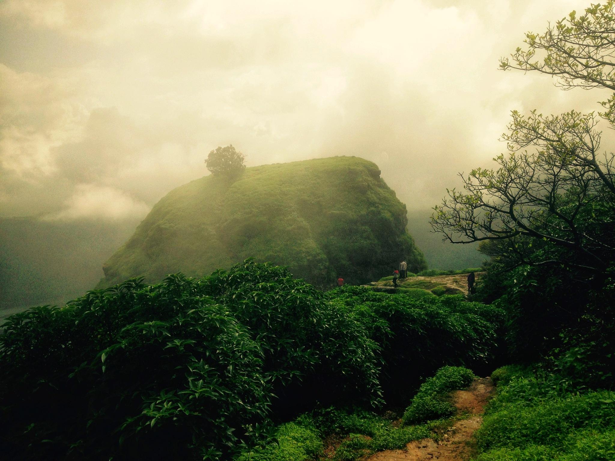 Dreamland by Shruti