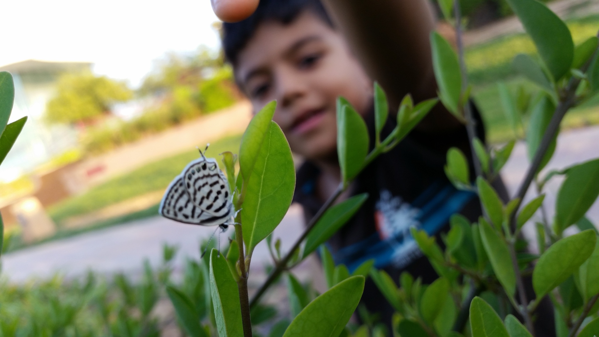 butterfly by Zaid Ibrahim