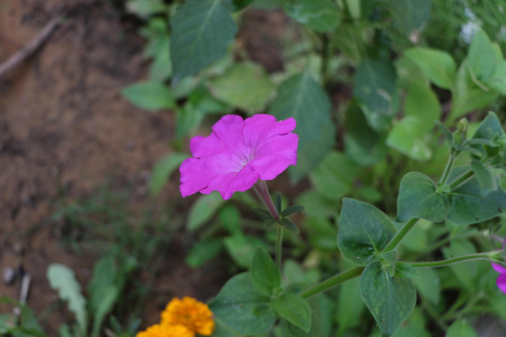 flower by Zaid Ibrahim