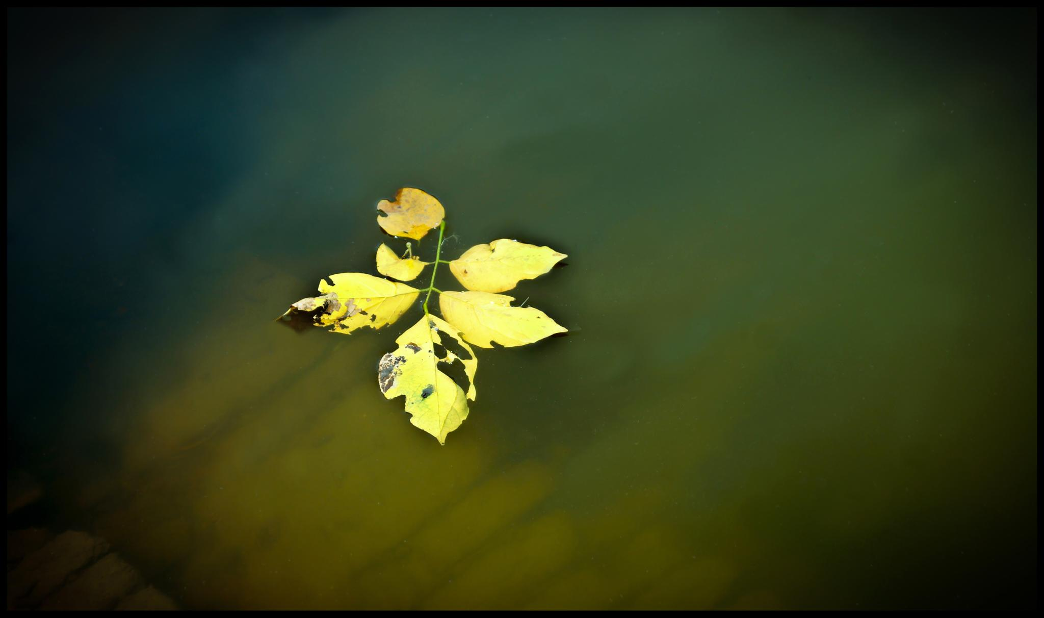 solitary leaves..  by Subhajit5115