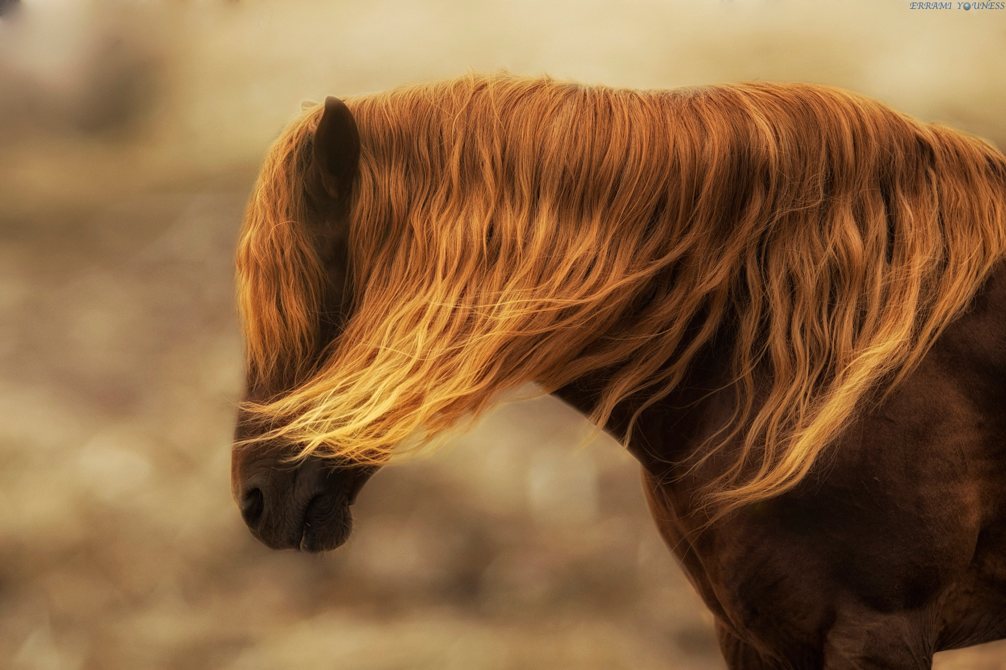 Glamour handsome Horse by Errami Youness