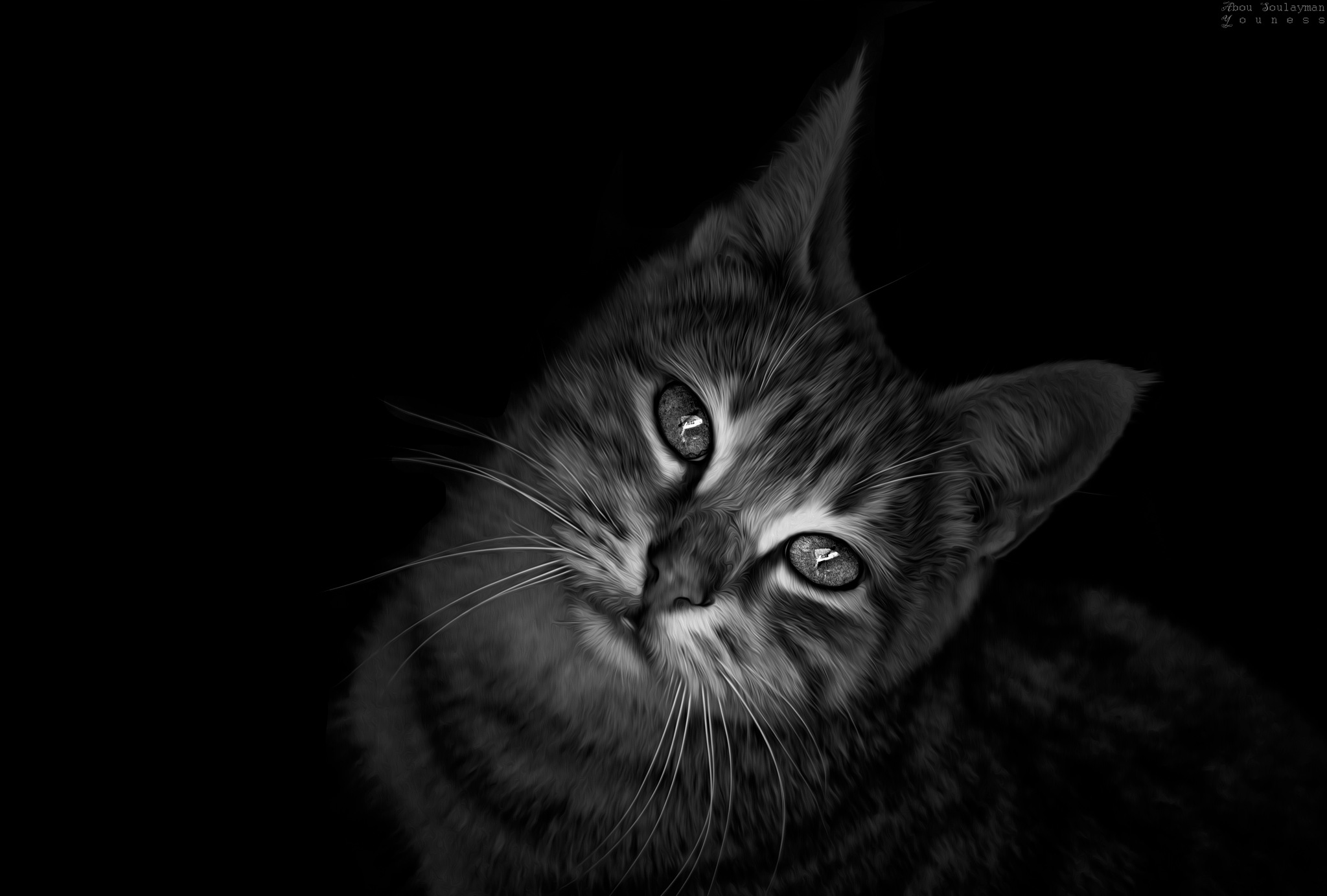 Sad cat by Errami Youness
