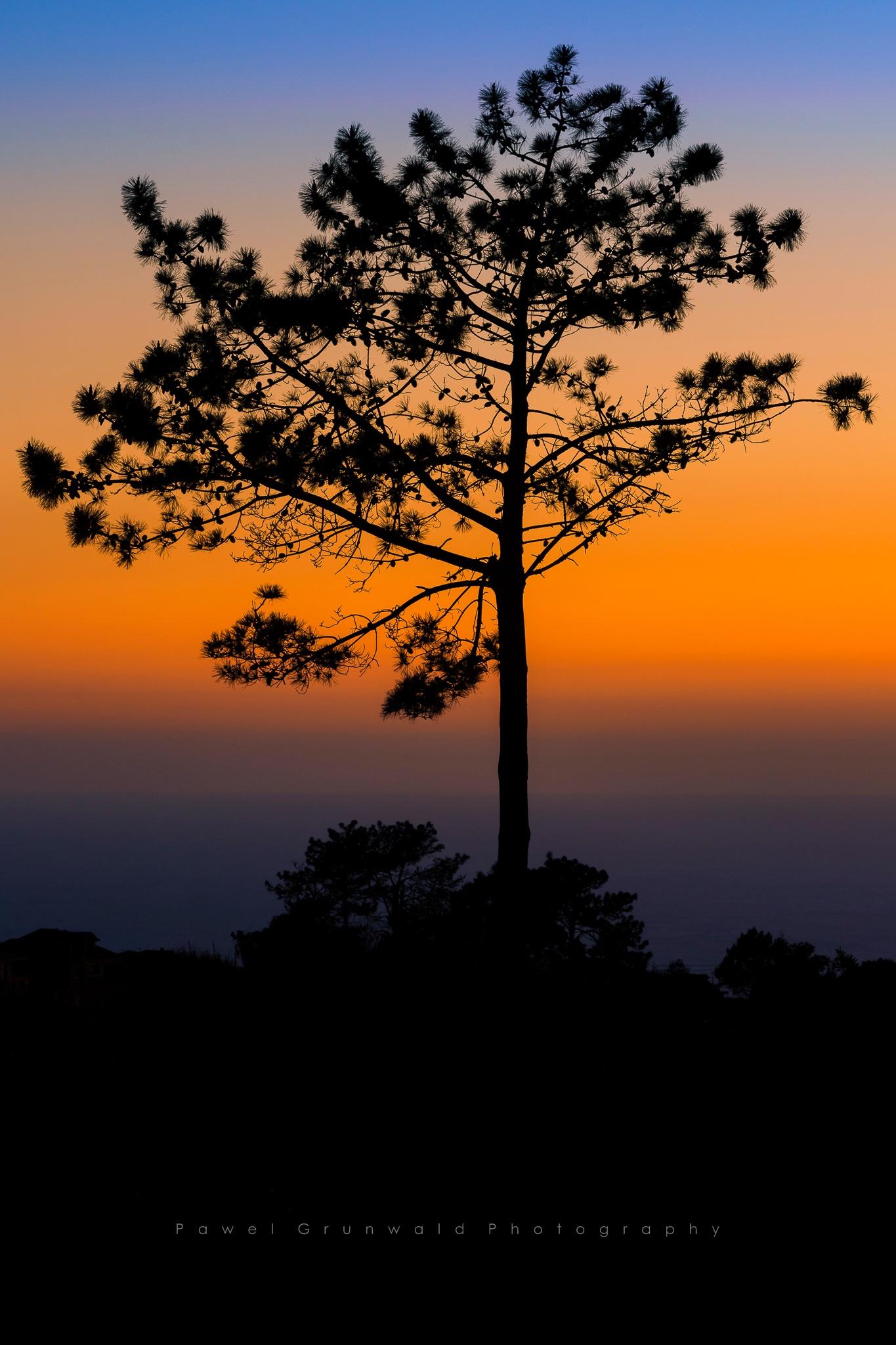 Prazeres tree by PawelGrunwald