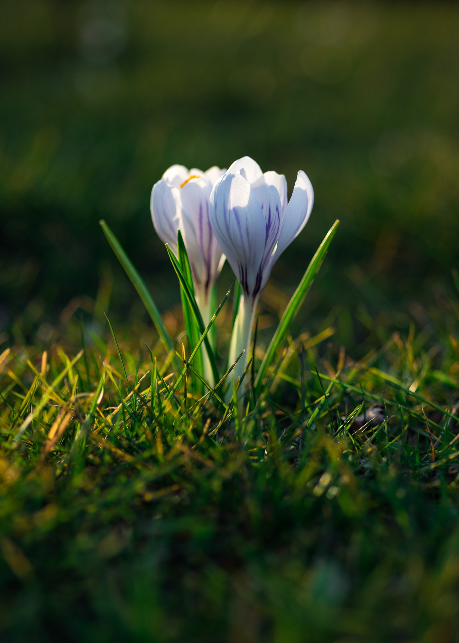 two flowers by PawelGrunwald