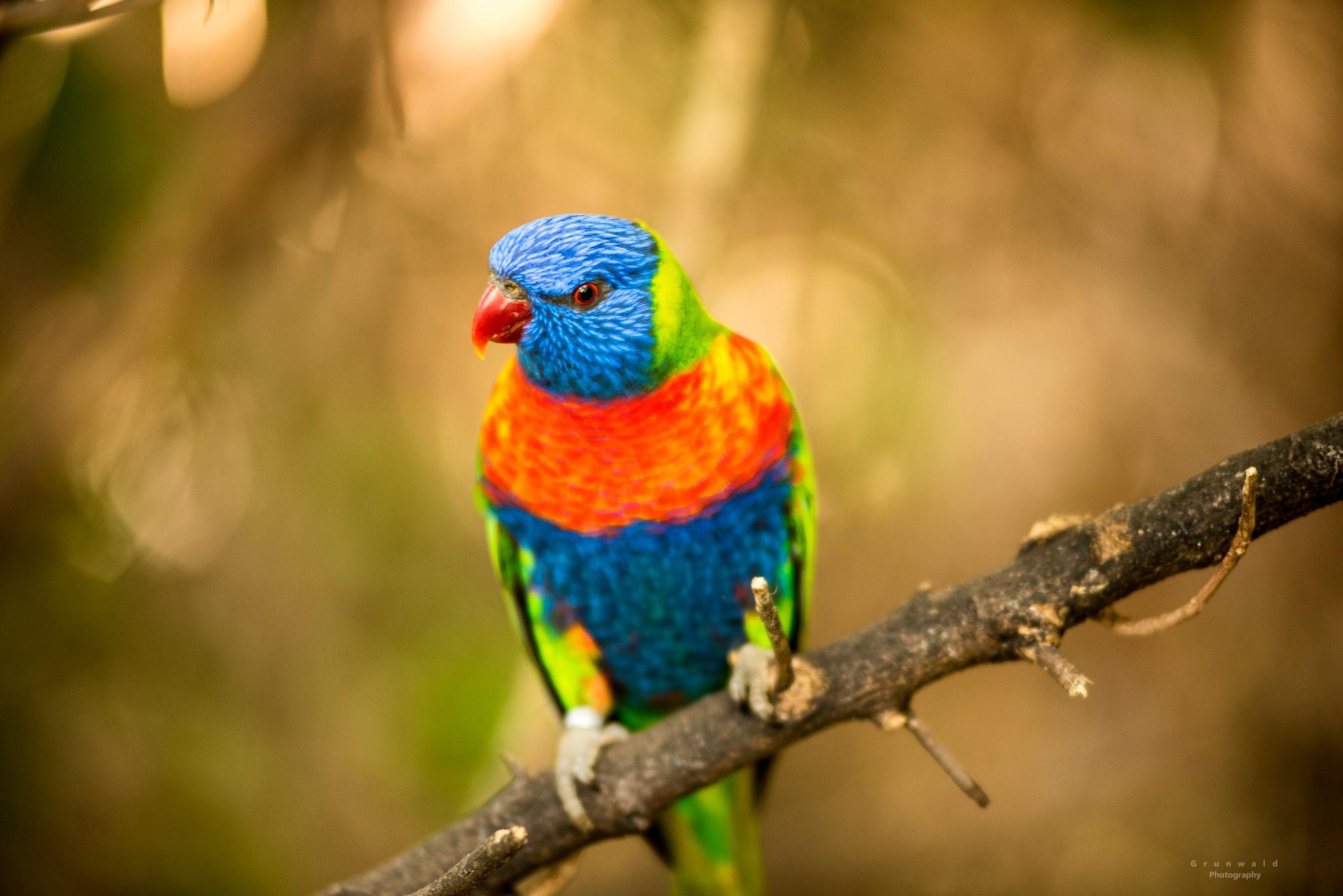 bird by PawelGrunwald