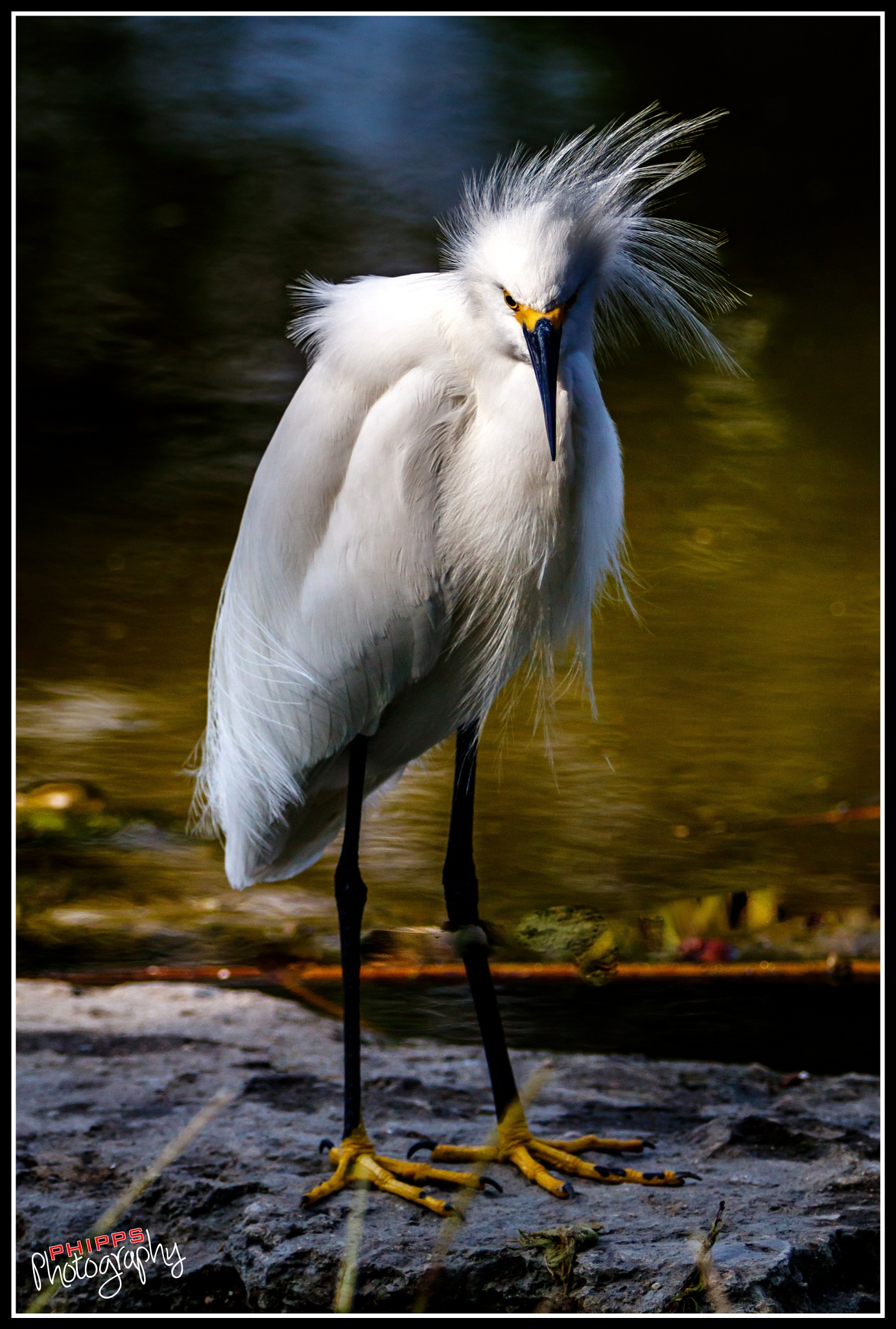 Bad hair day... by PhippsPhotography