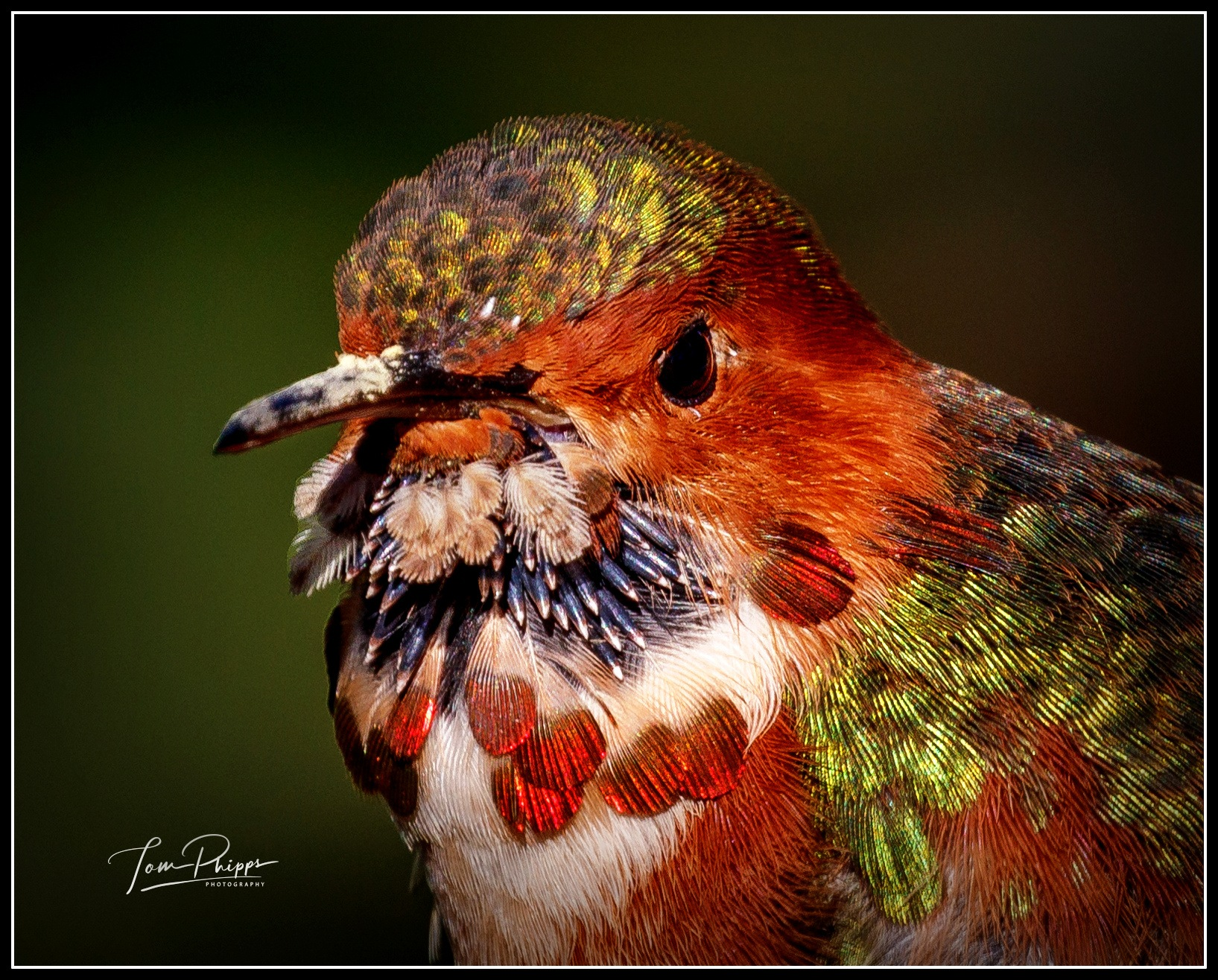 A portrait of the colorful Mr. Allen's...   by PhippsPhotography